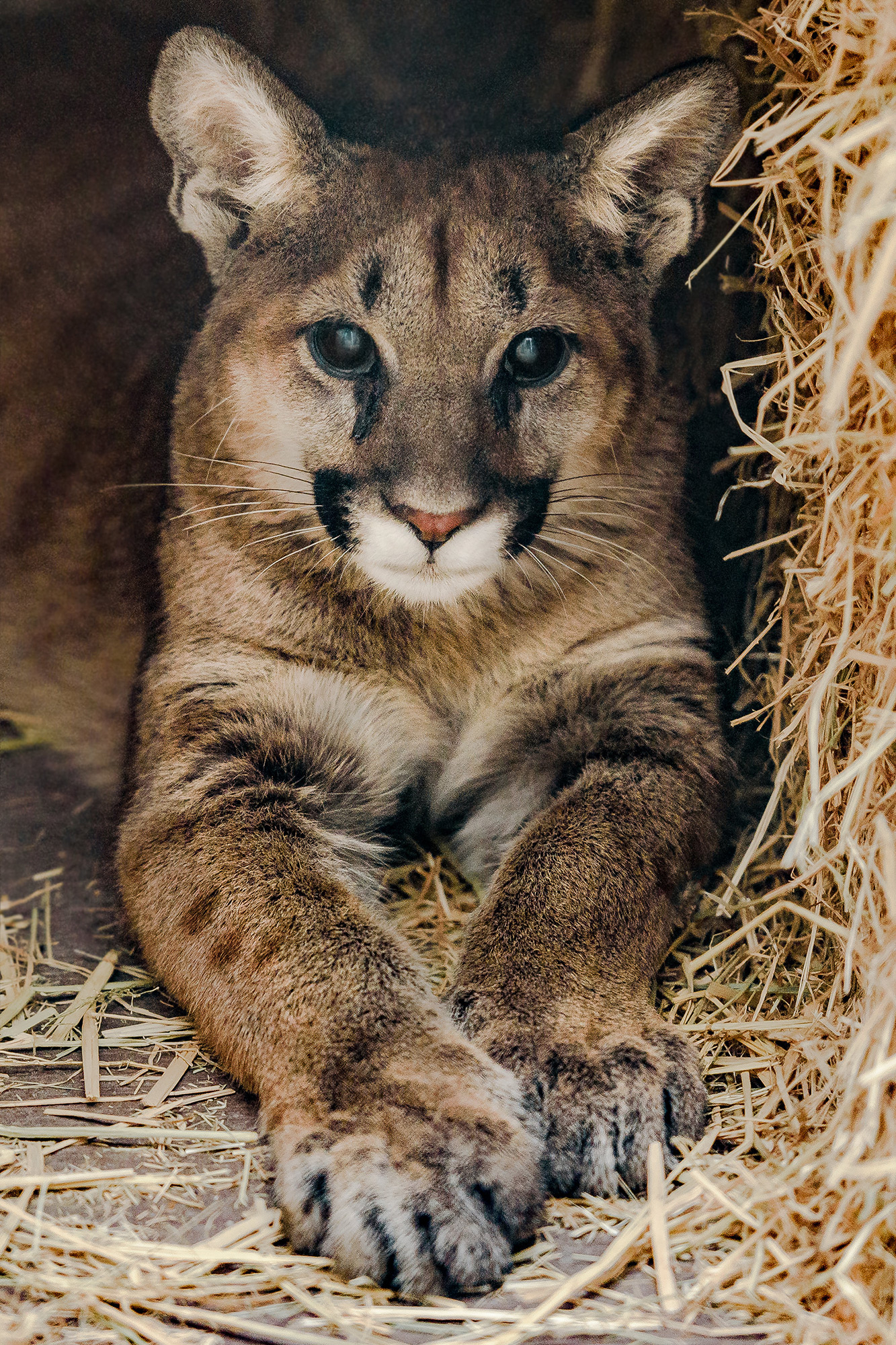 Oregon Woman Found Mountain Lion In Living Room People Com