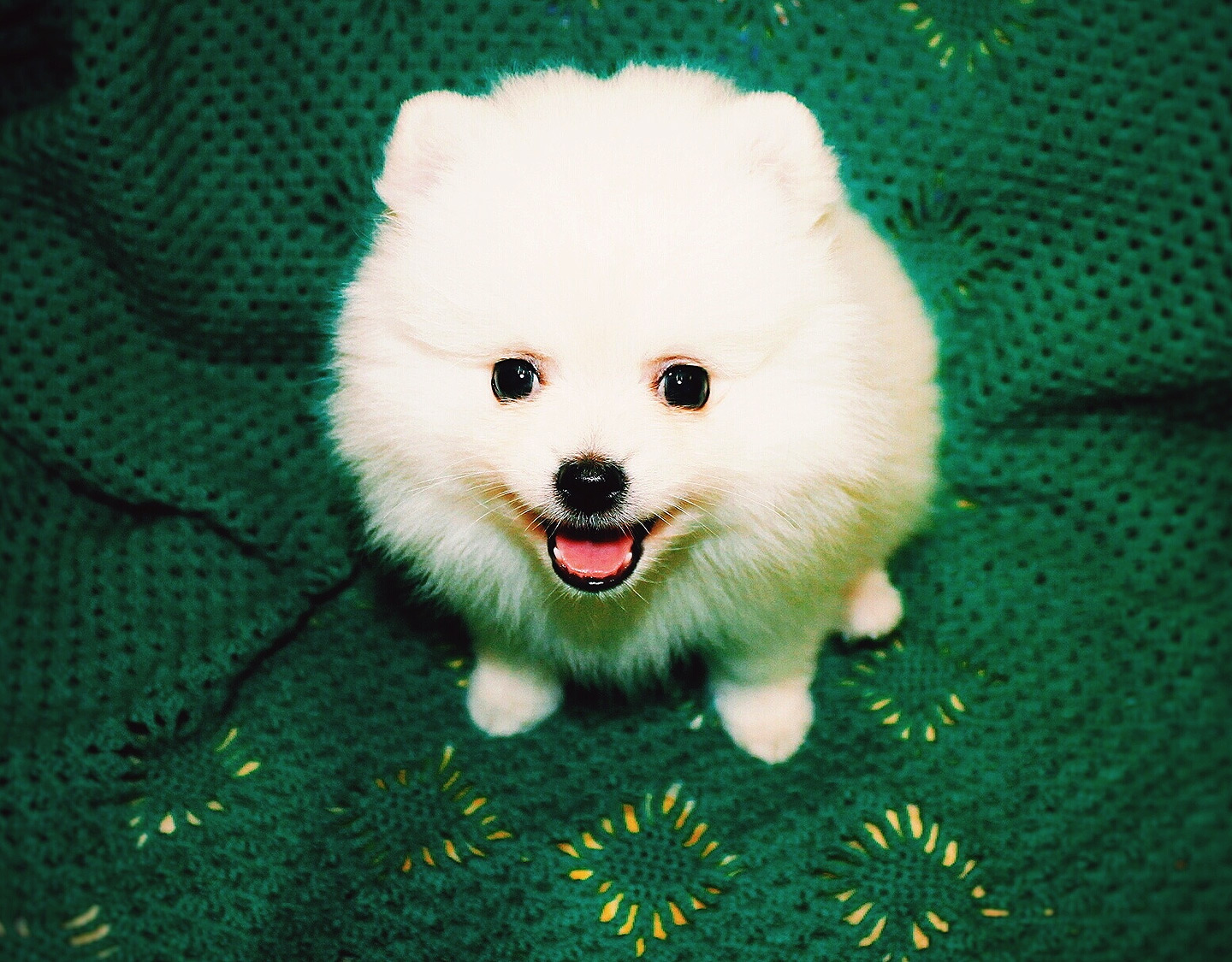 Close-Up Of Pomeranian Puppy On Chair