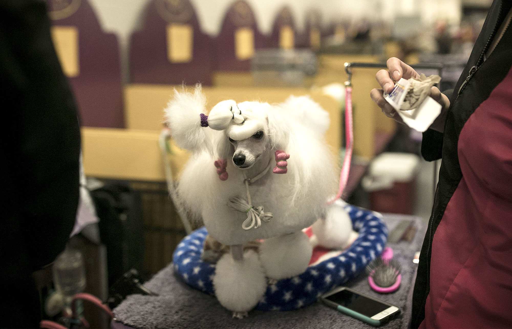 142nd Annual Westminster Kennel Club Dog Show