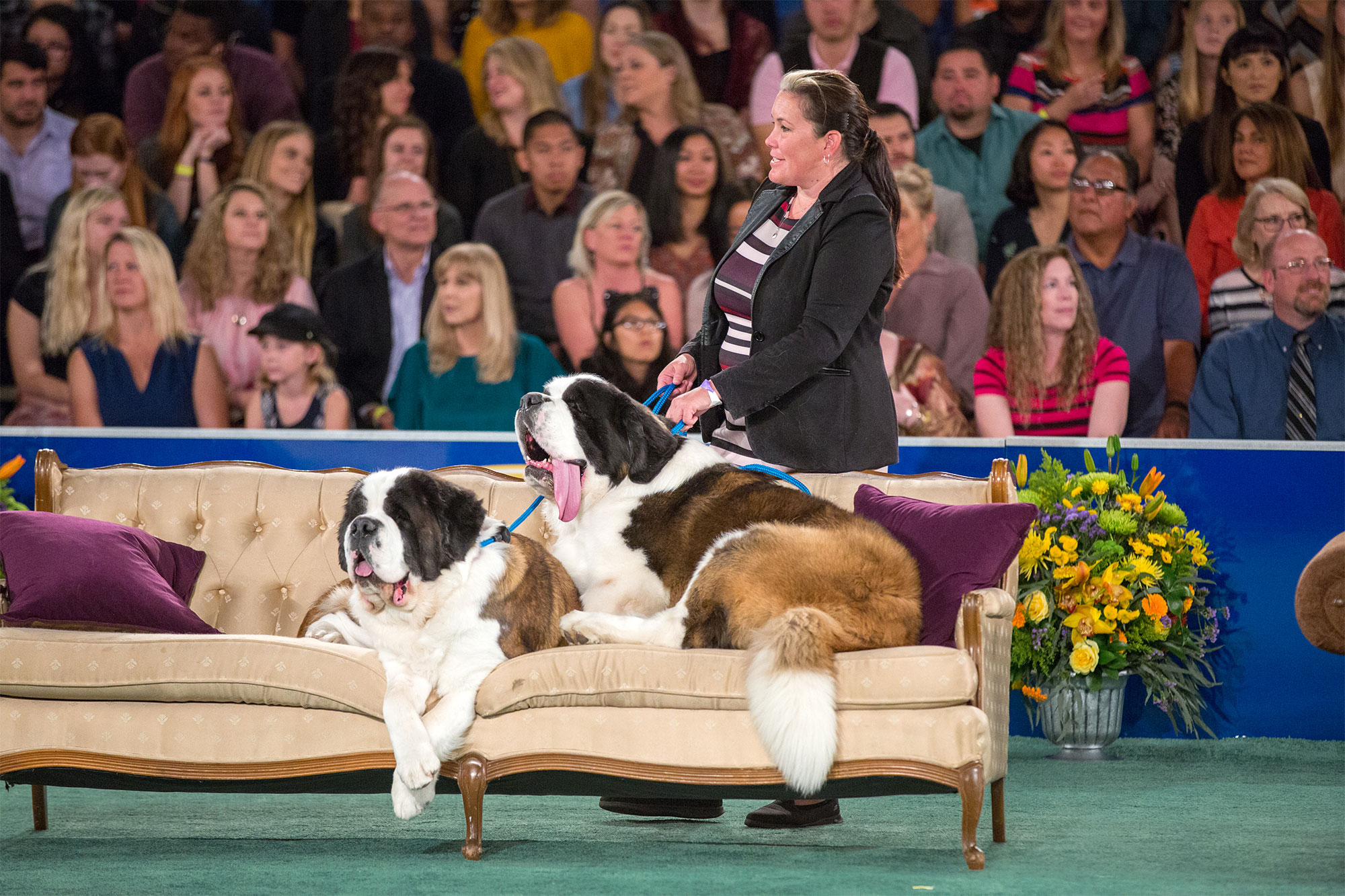 2018 American Rescue Dog Show Final Photo Assets