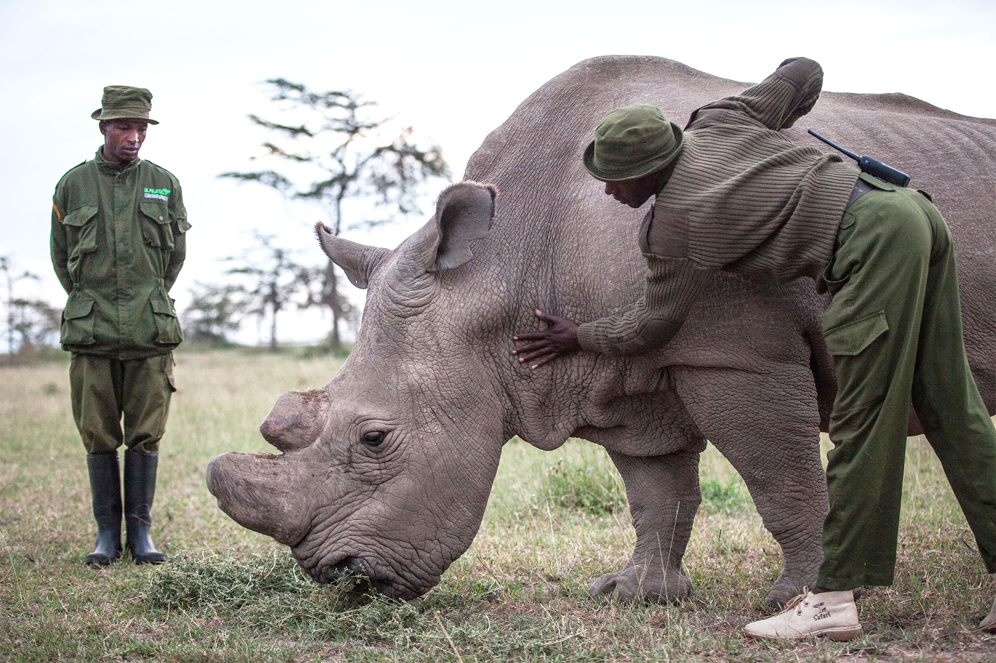Almost the end for Kenya's northern white rhino