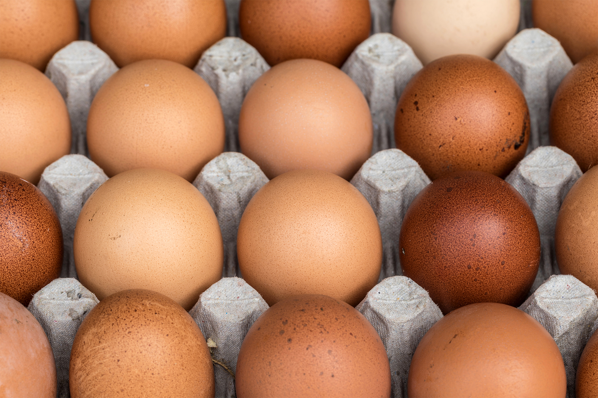 Chicken eggs pallet from the farm