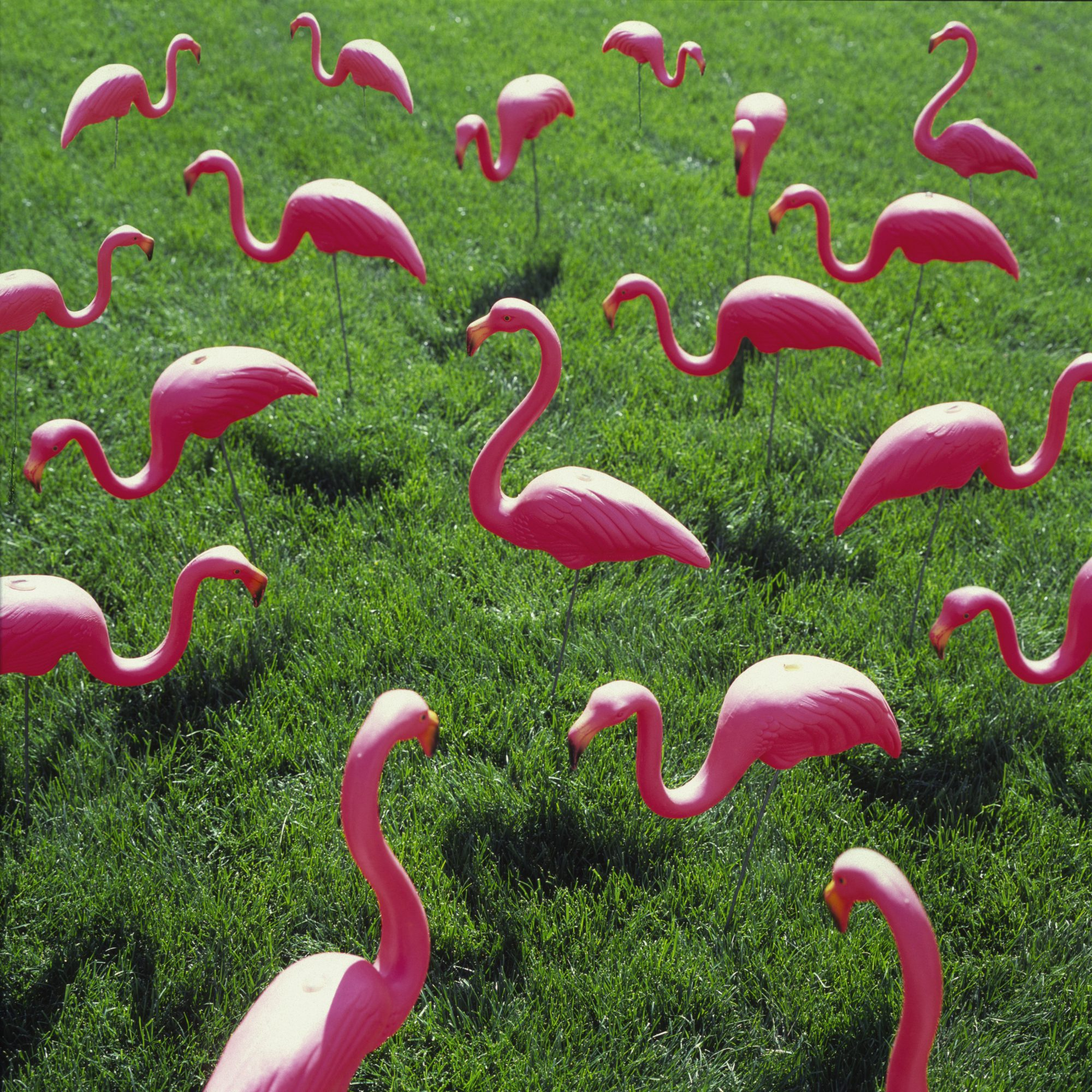 Plastic pink flamingos on lawn, full frame