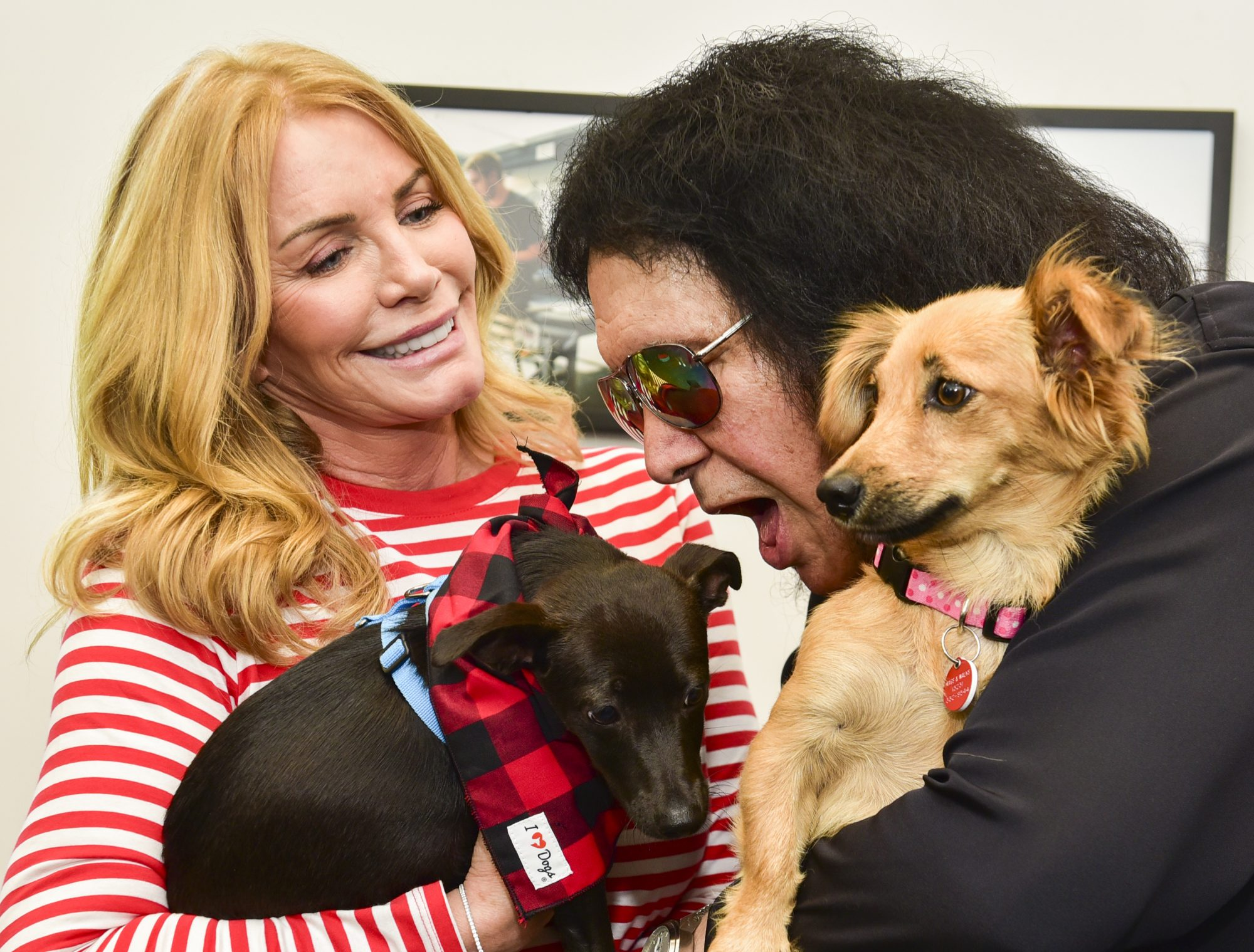 Gene Simmons Of KISS Makes Surprise Appearance At Wags & Walks Dog Rescue To Deliver Toys And Treats Provided By iHeartDogs.com