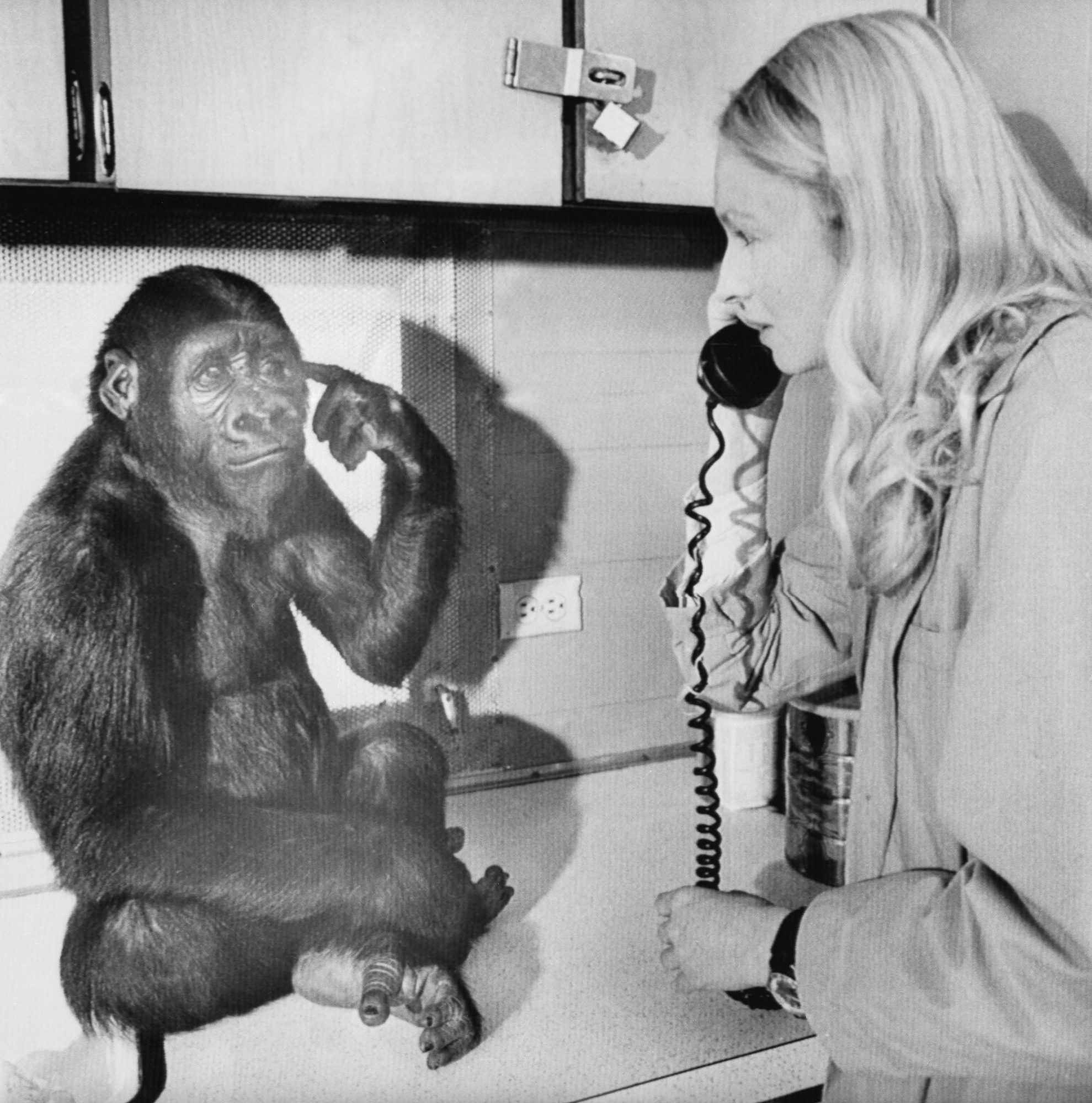 Penny Patterson with Koko the Gorilla