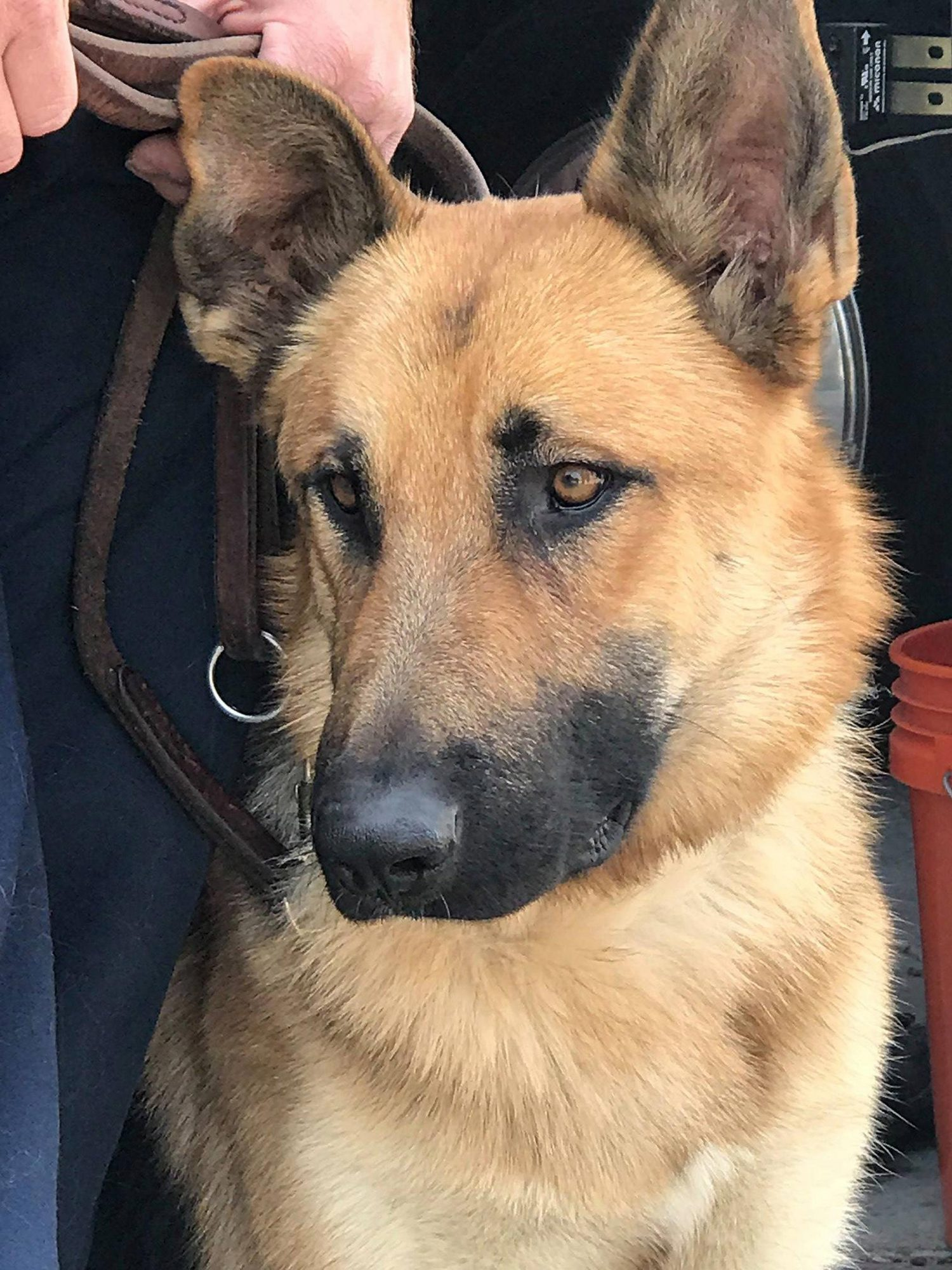 firefighter-adopts-stray-dog-2