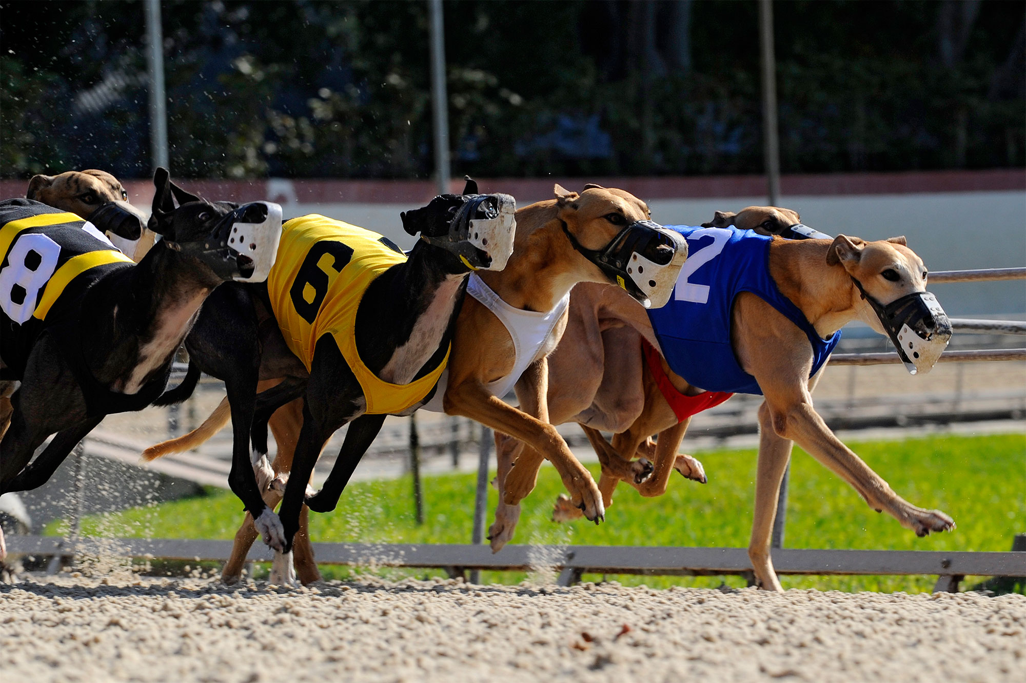 Greyhound dog racing, Fort Myers