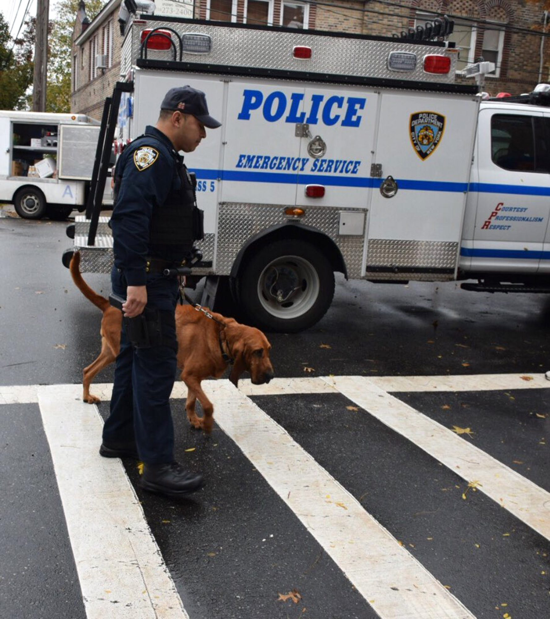 nypd-dog-angel-1