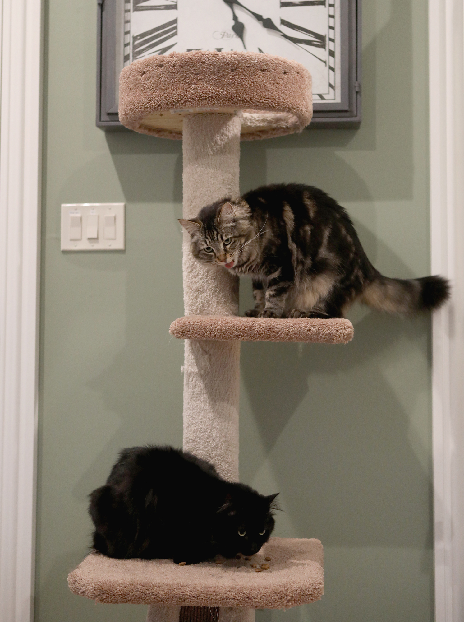 Owners rent studio for cats in San Jose