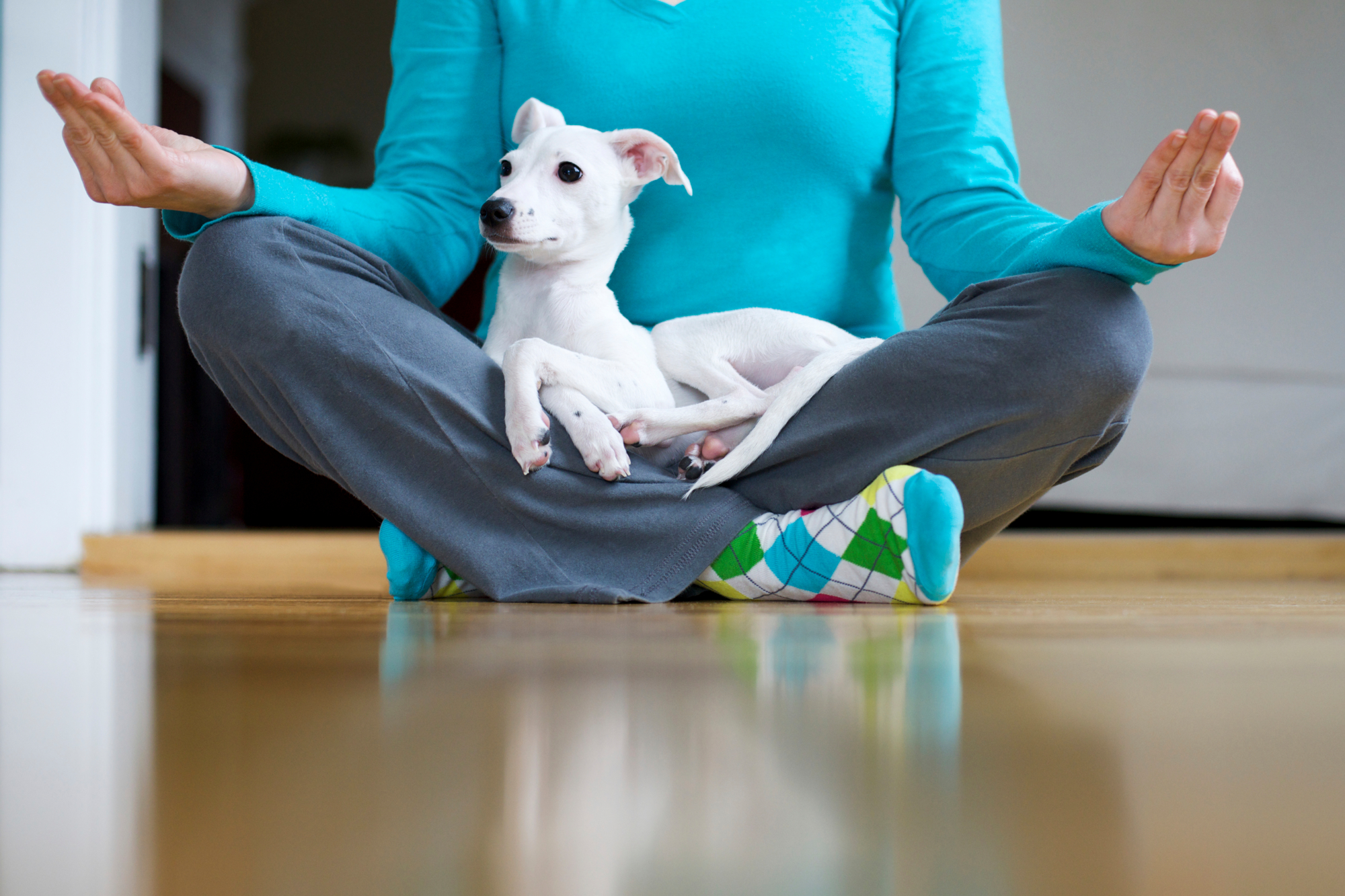 Woman doing yoga pose with a dog in her lap