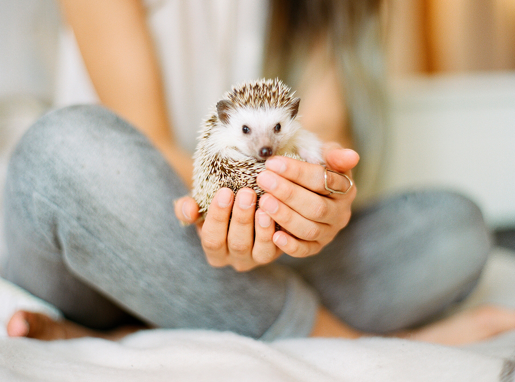 Woman holding hedgehog while sitting on bed