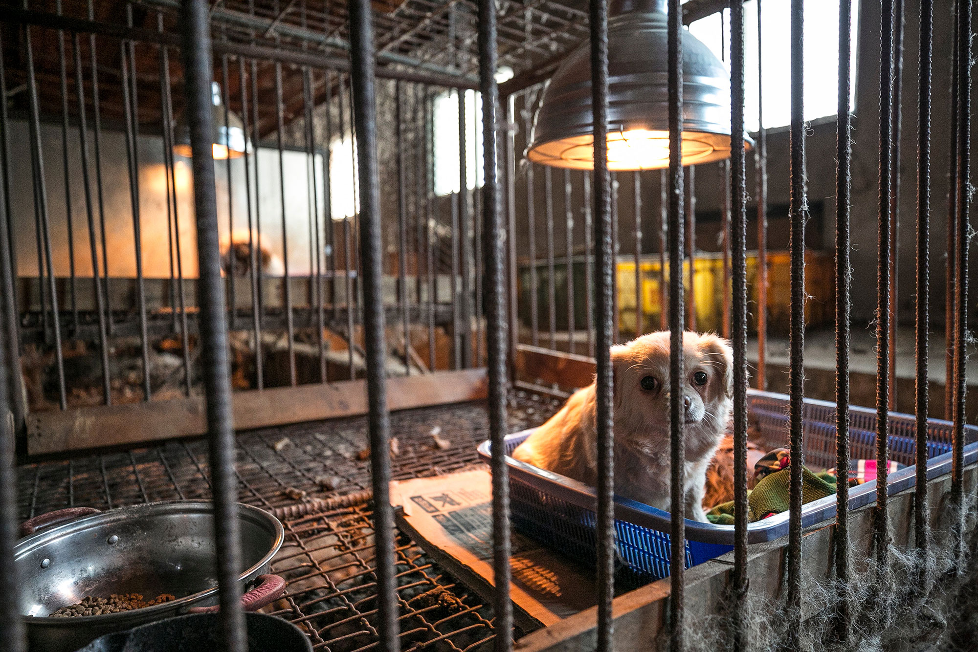 South Korea Dog Meat Farm (Farm 14)