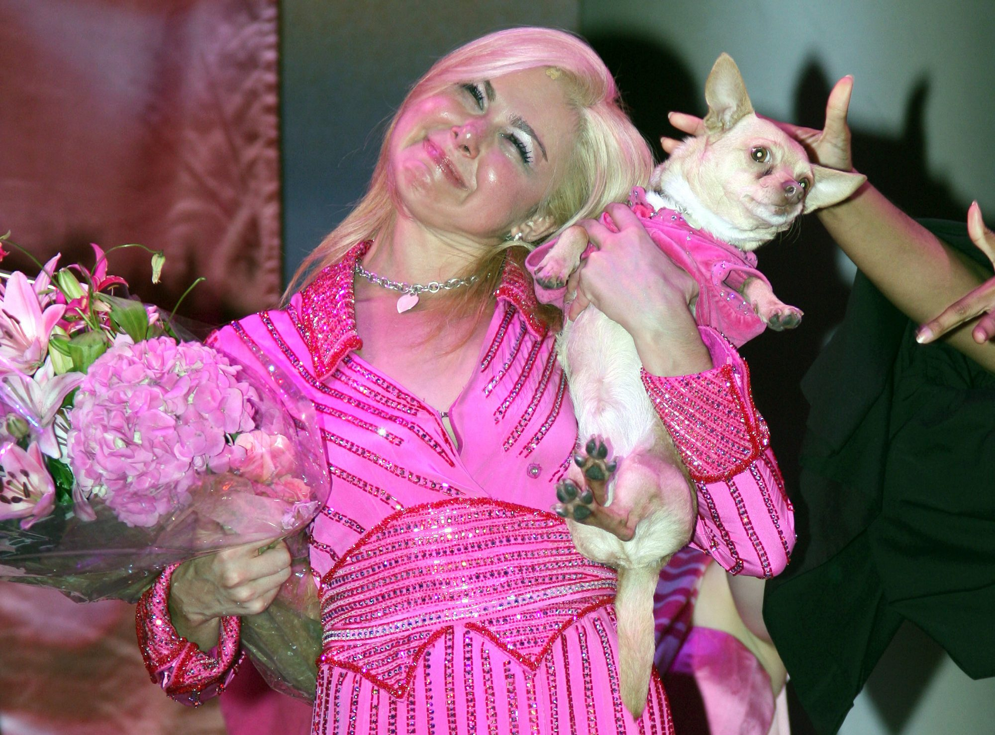 chico-chihuahua-legally-blonde-3