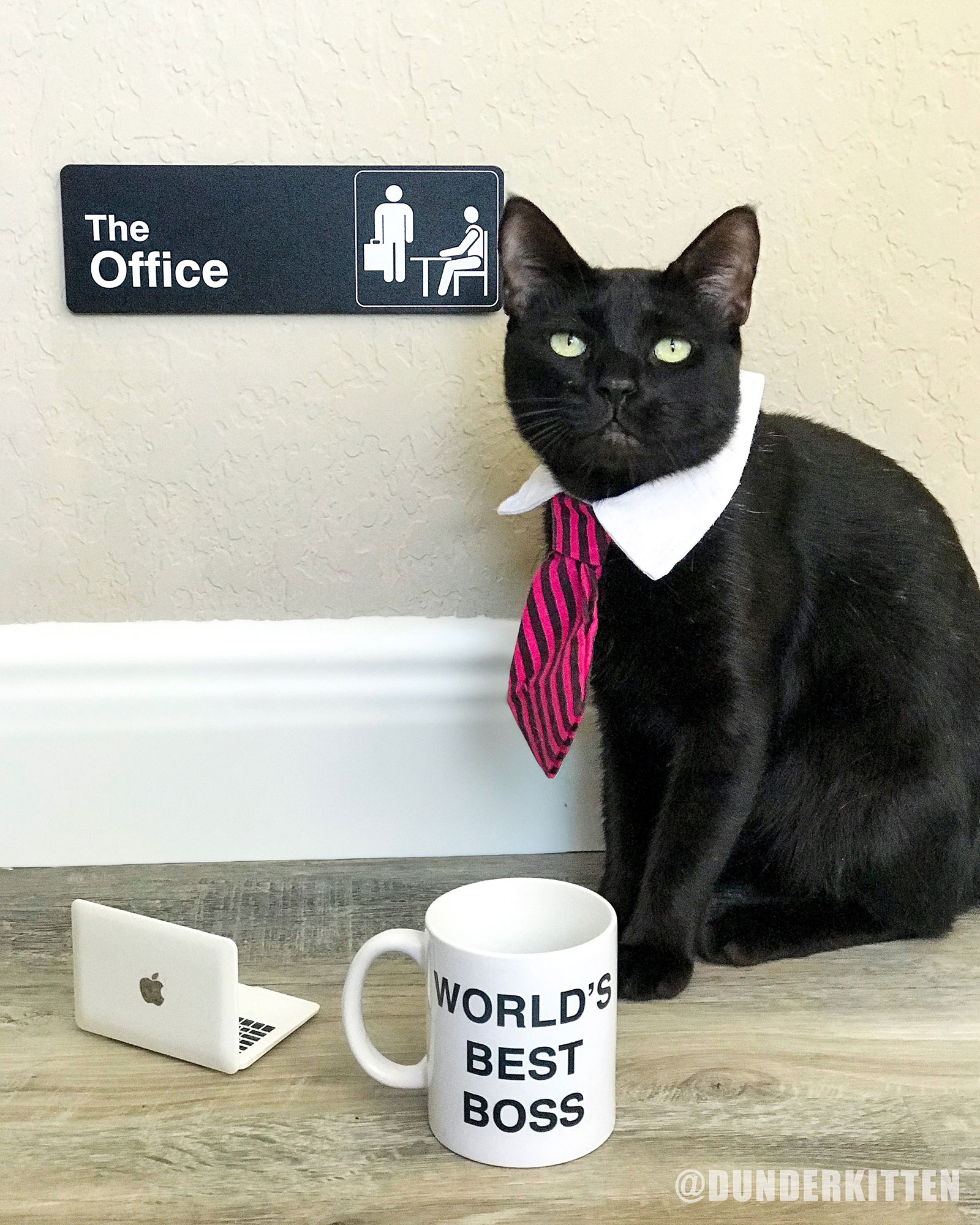 office-cat-7