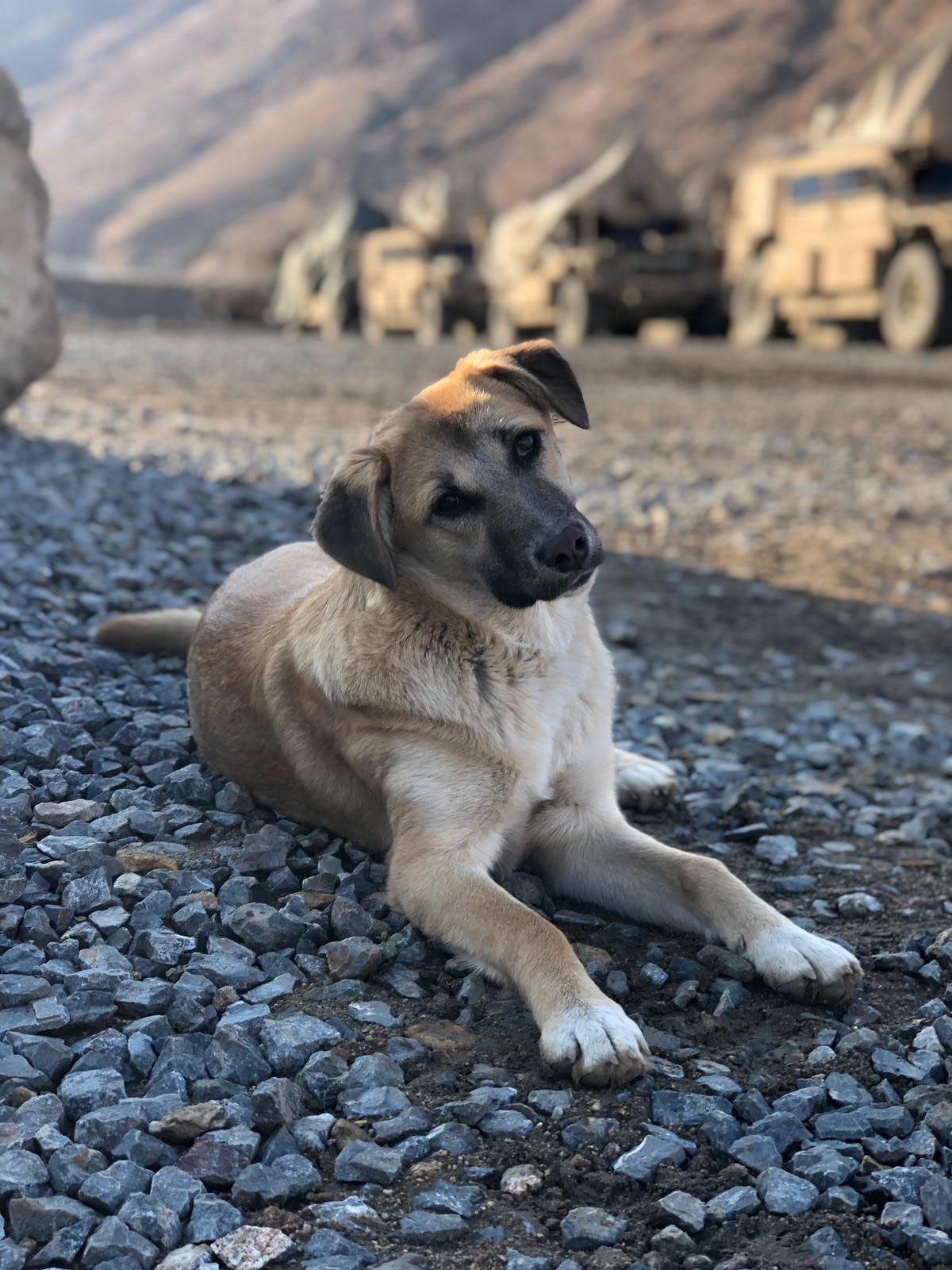Adopted Dog Paws of War