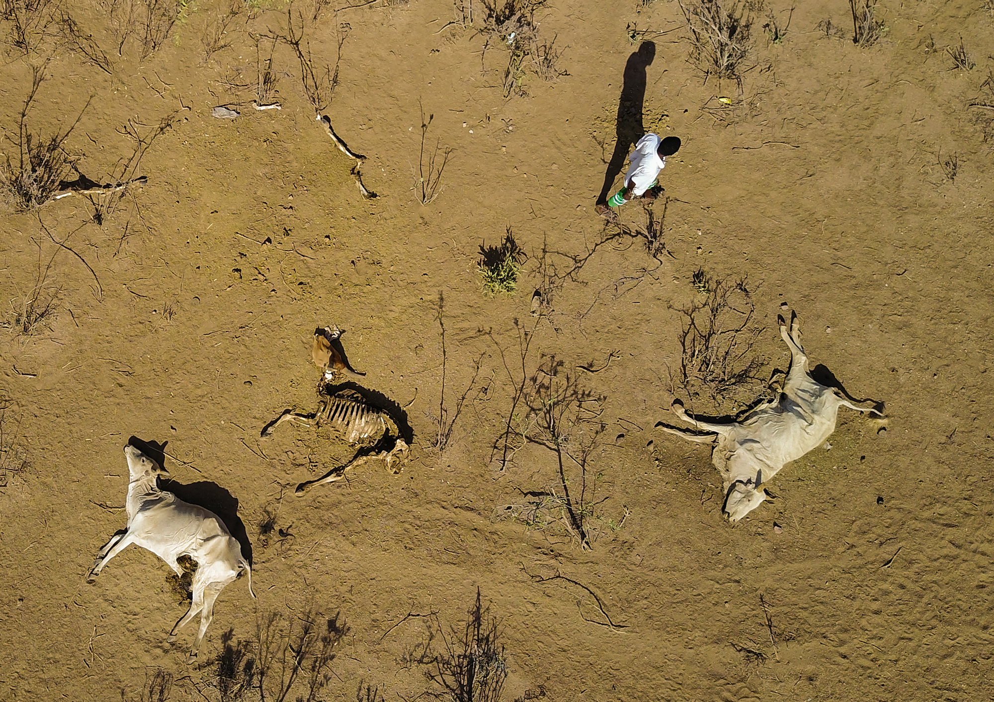 The Devastating Drought in the Horn of Africa