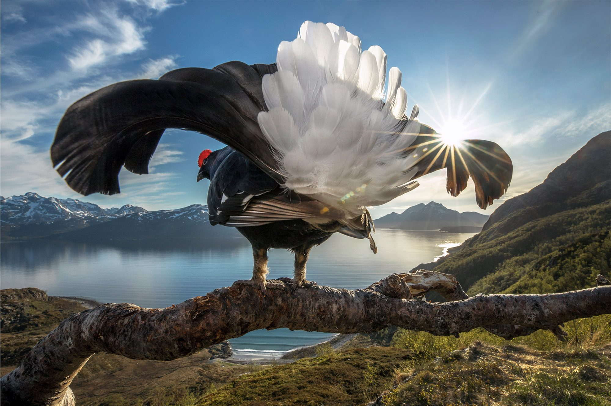 The Big Picture 2019 From the beautiful to the bizarre, this photographic showcase of life on Earth shines a light on some of our planet's most amazing species and places.