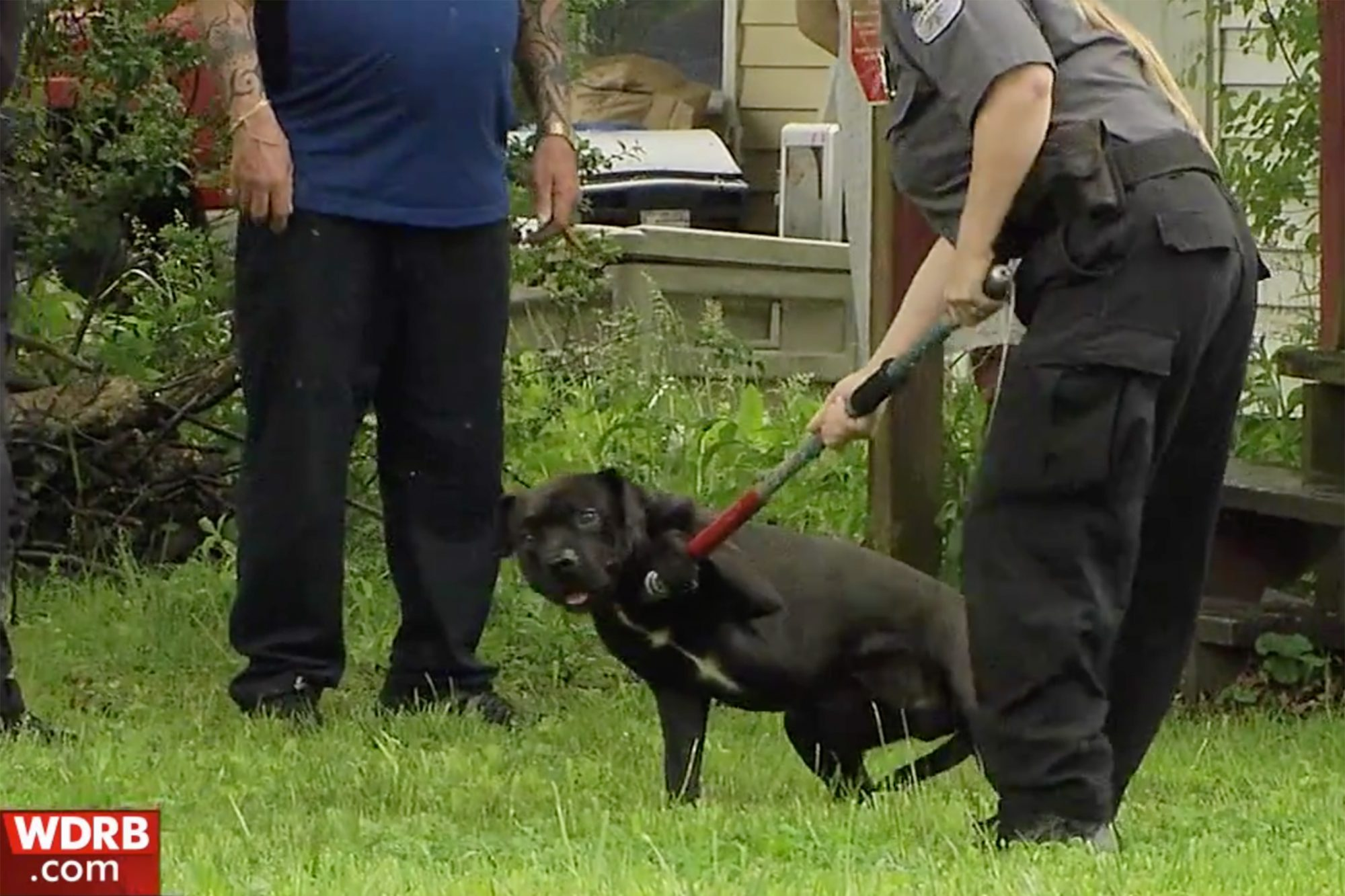 https://www.wdrb.com/news/year-old-who-died-after-dog-attack-in-chickasaw-neighborhood/article_691acd26-6dee-11e9-a913-7fc8732bd179.html