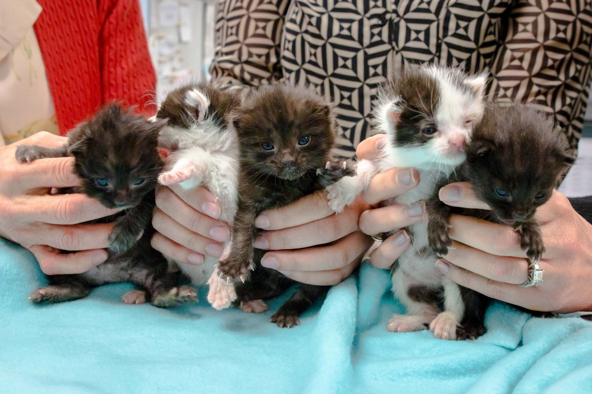 Construction workers were shocked to discover a litter of kittens stowed away on their truck after driving from Hayward, Calif. to San Diego.