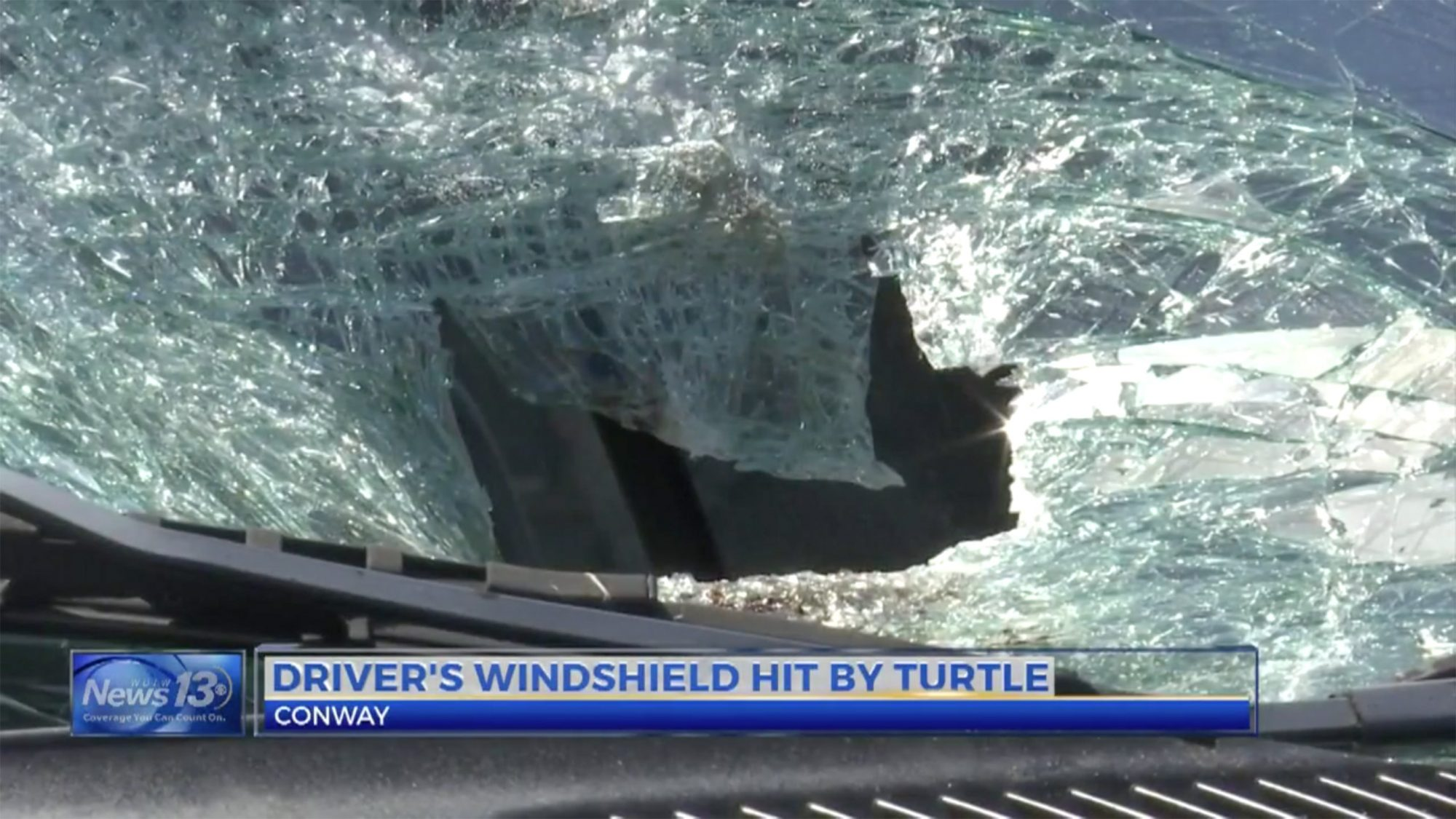 Turtle smashes into car near Lake Busbee in Conway