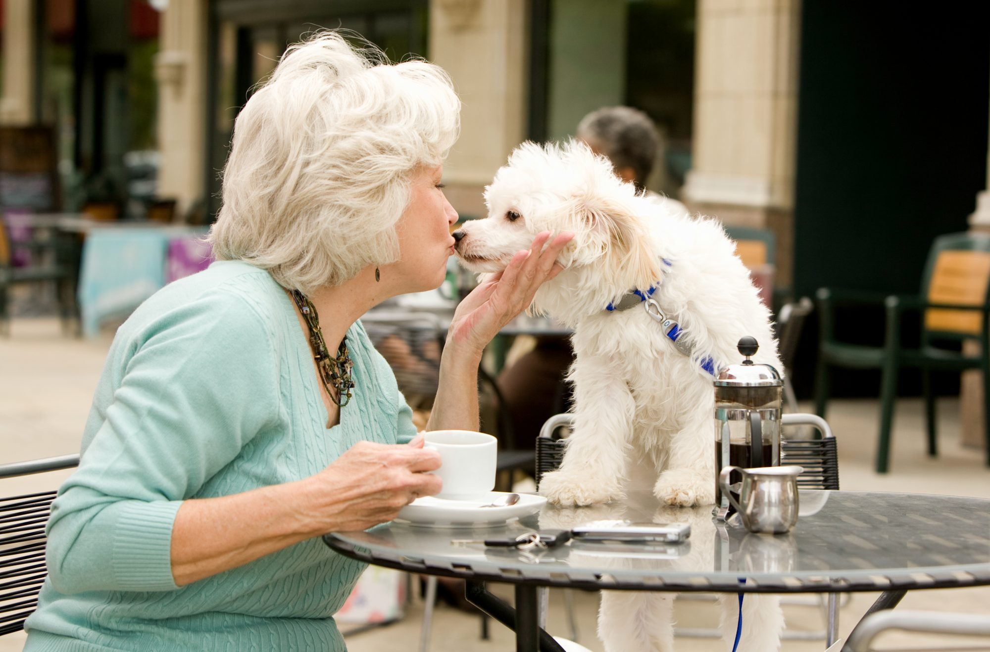 The Blue Ridge Mountain city calls itself Dog City U.S.A., and canines are welcome at bakeries, bars breweries and stores. A hotel, Aloft, even fosters dogs until they are adopted by guests.