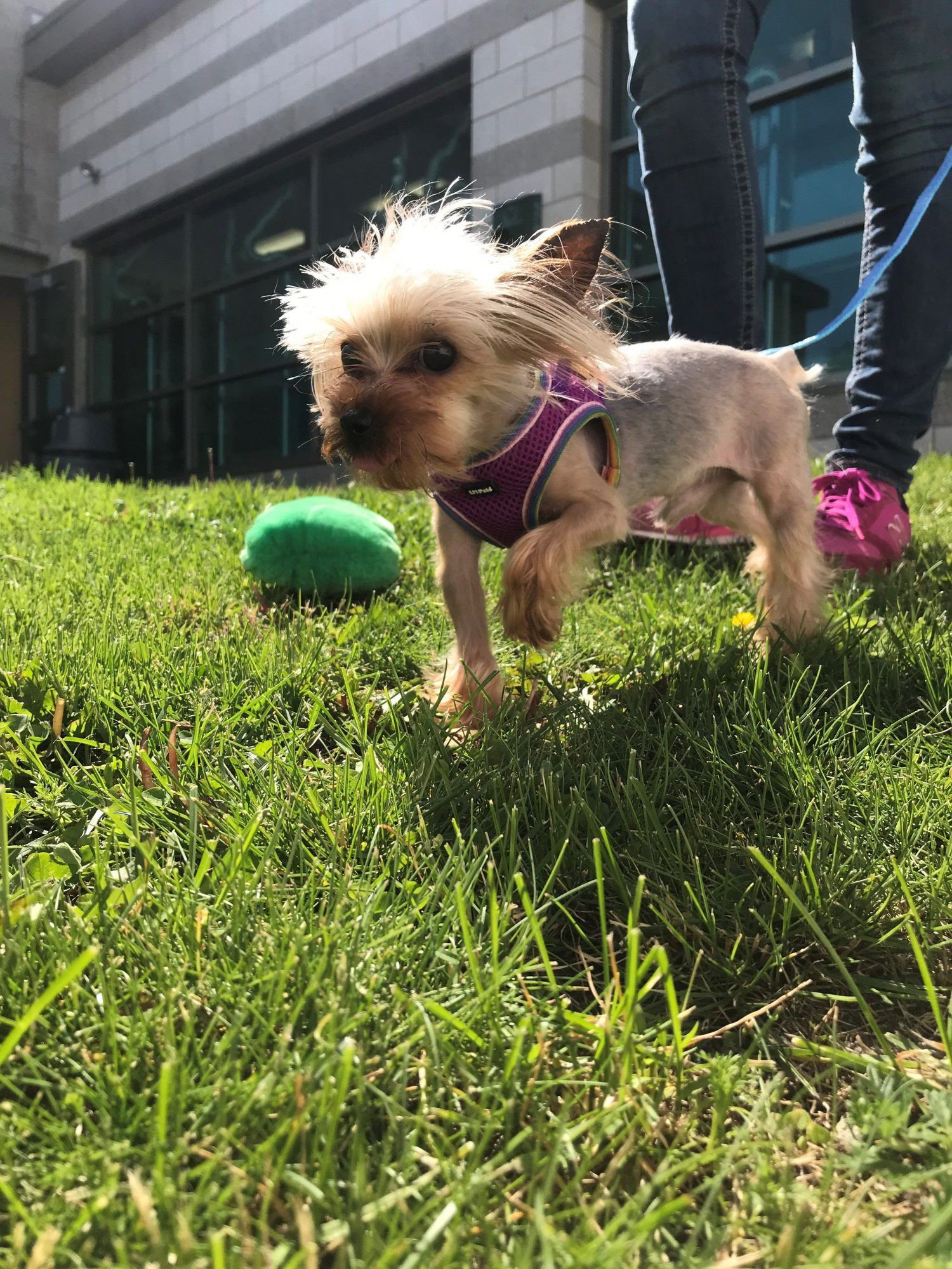 After - Tiny Oscar enjoys some sun and fun outdoors at the MSPCA in Boston (credit MSPCA-Angell)