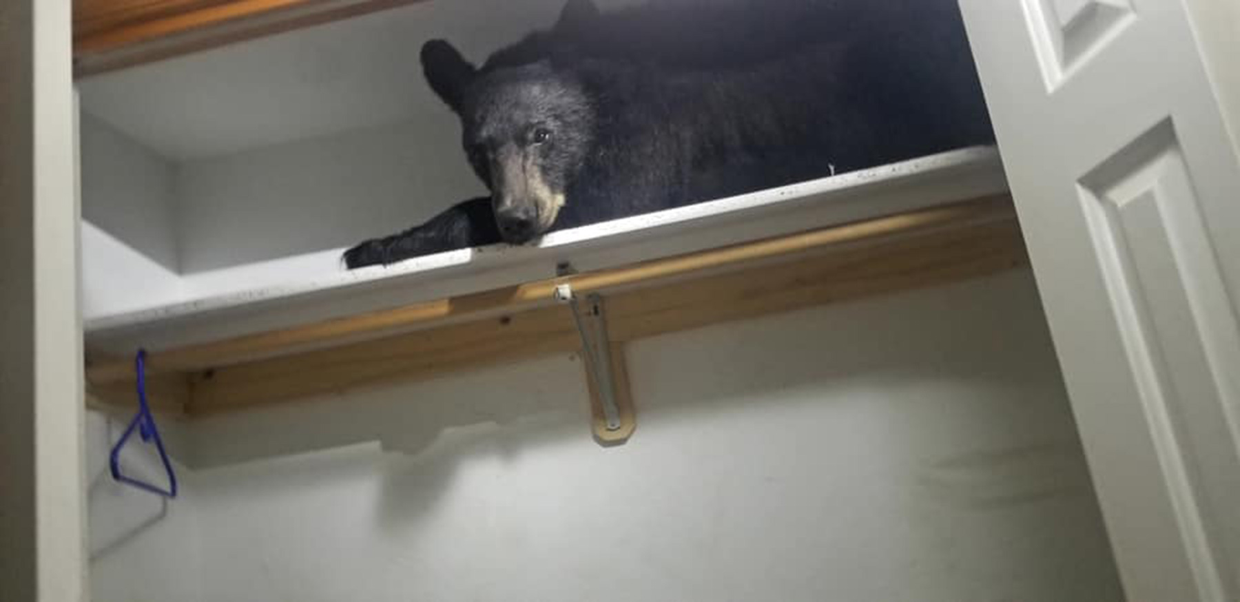 Deputies responded to a call up Butler Creek for a bear stuck inside a home