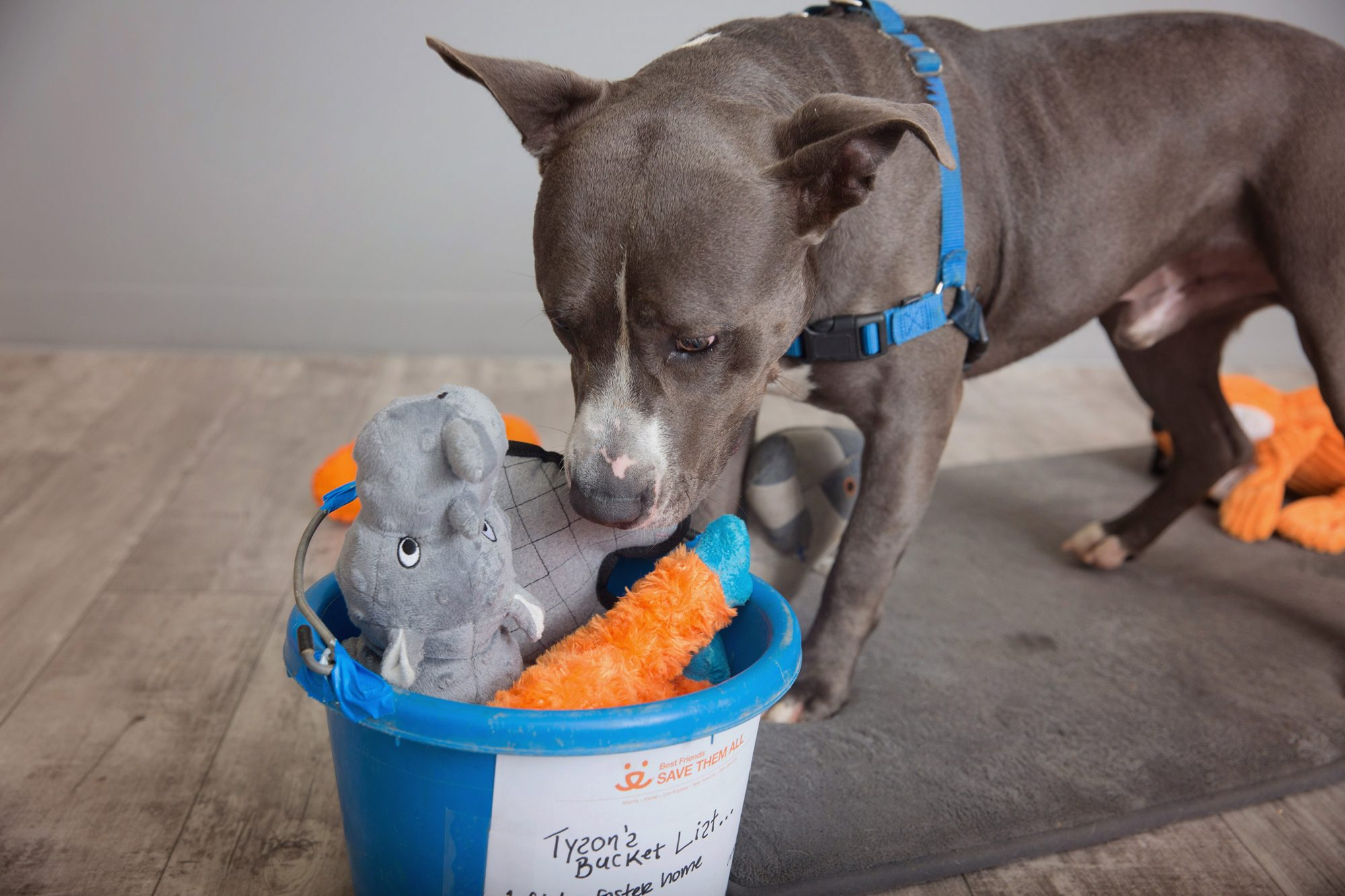 dog looking for hospice home
