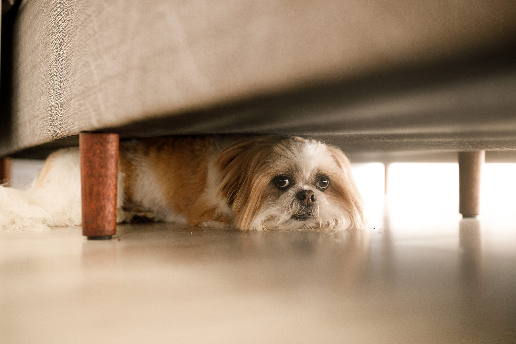 Anxious dog under couch