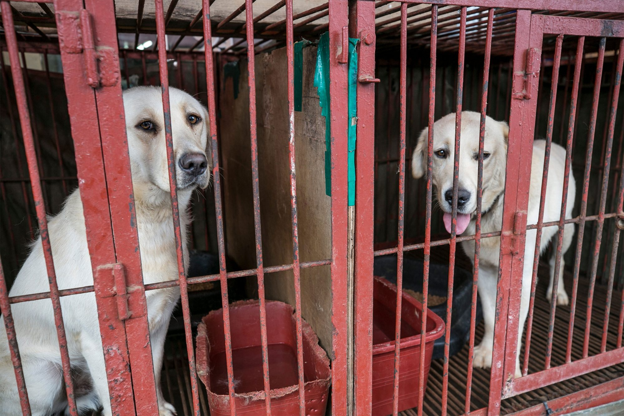 Humane Society International/Korea helps rescue dogs