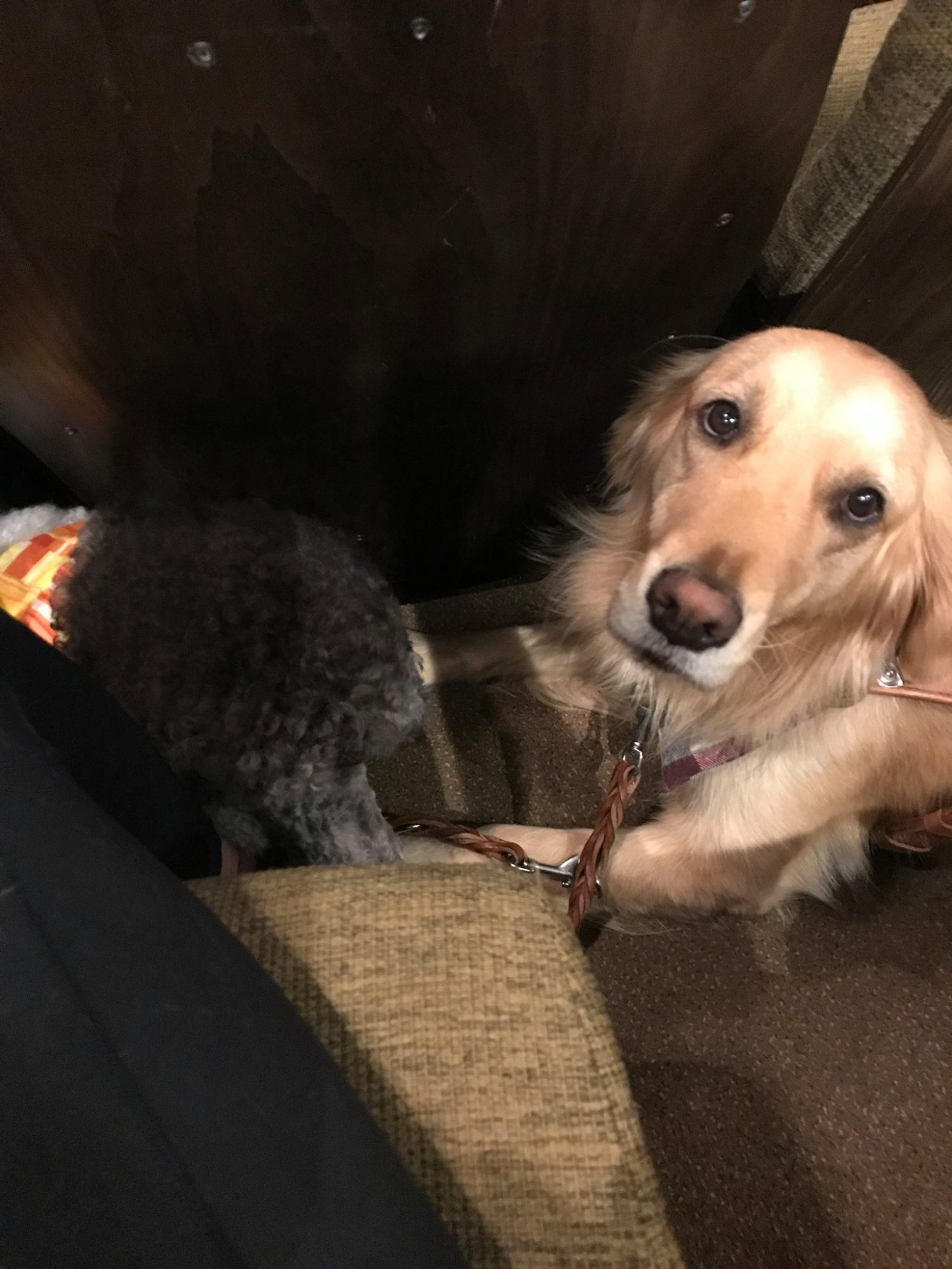 K-9 Country Inn Working Service Dogs