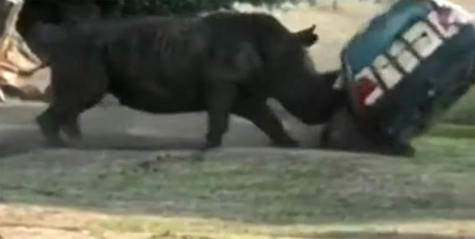 rhino flips zoo car