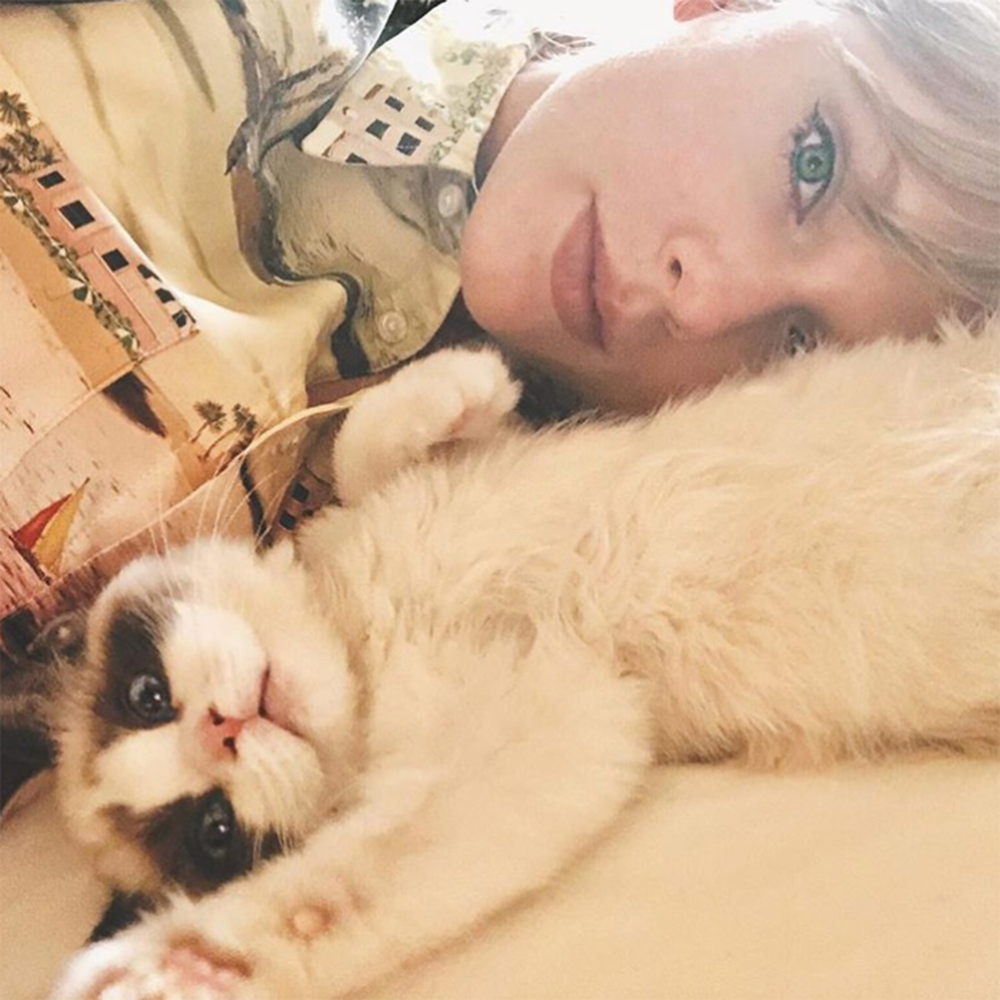 Taylor Swift new cat