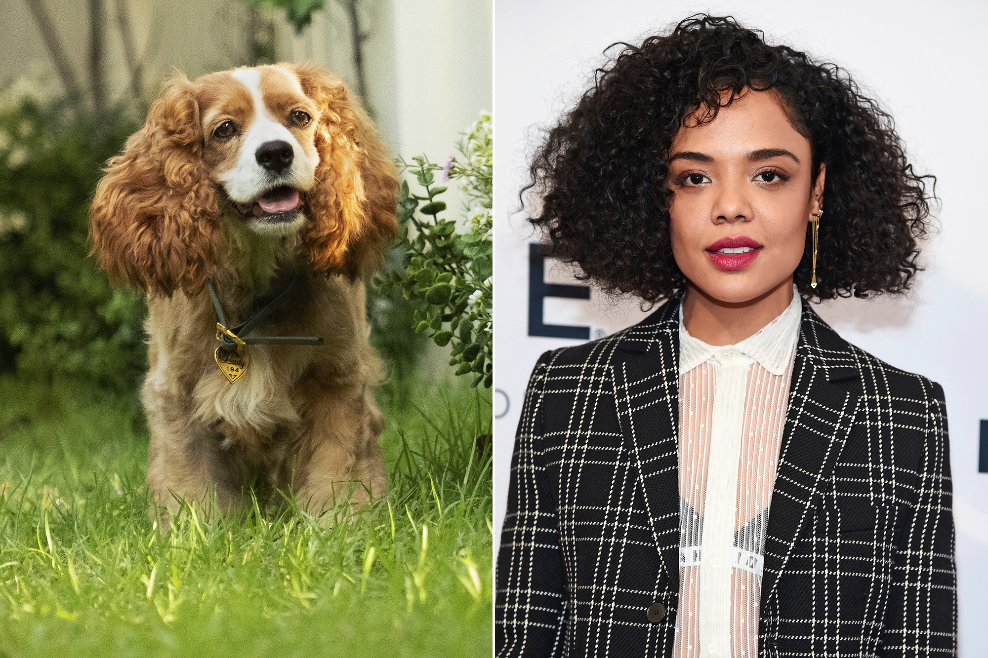 First Look At Disney S Lady And The Tramp Remake People Com