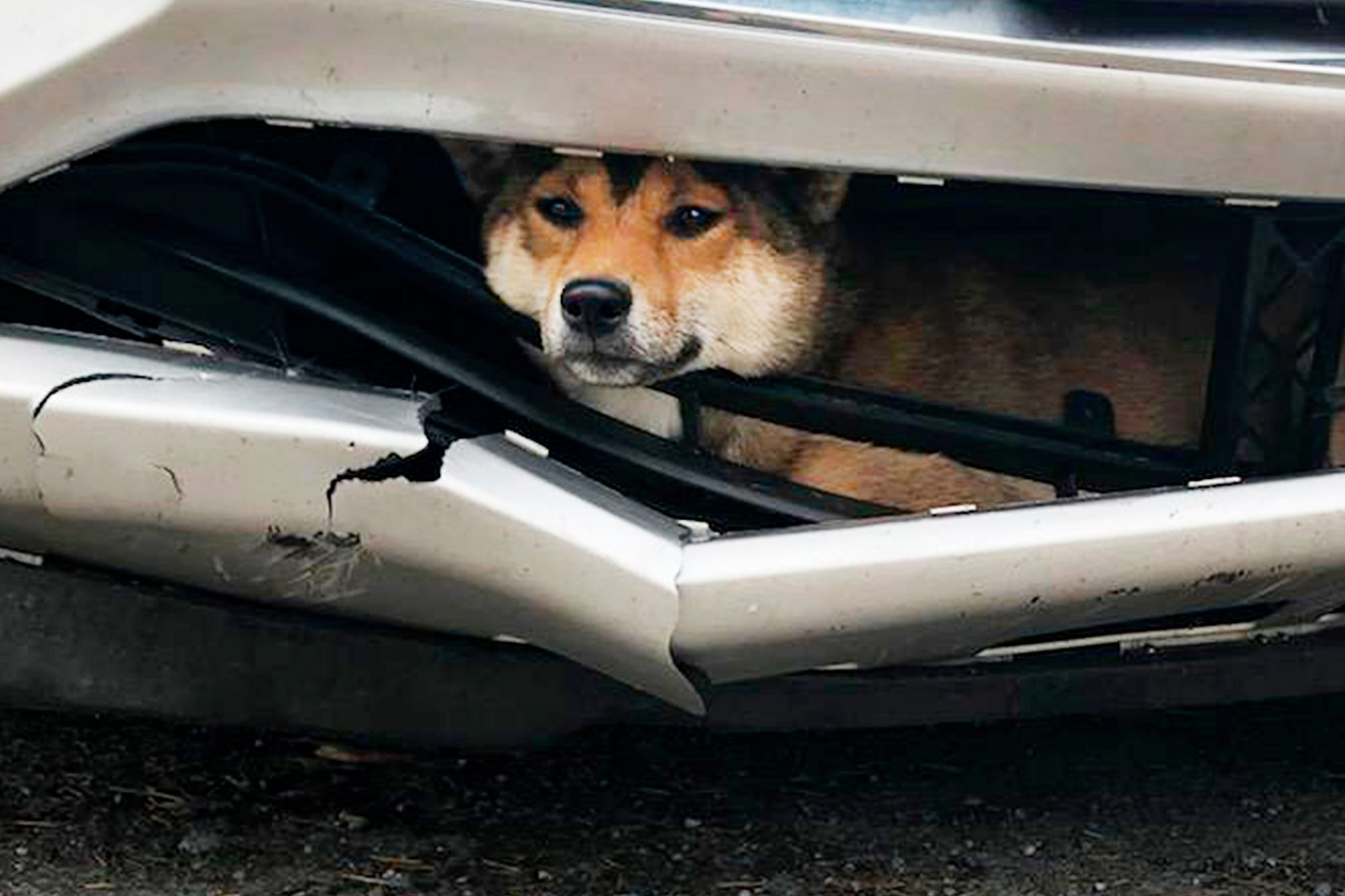 Dog Stuck Bumper Coco