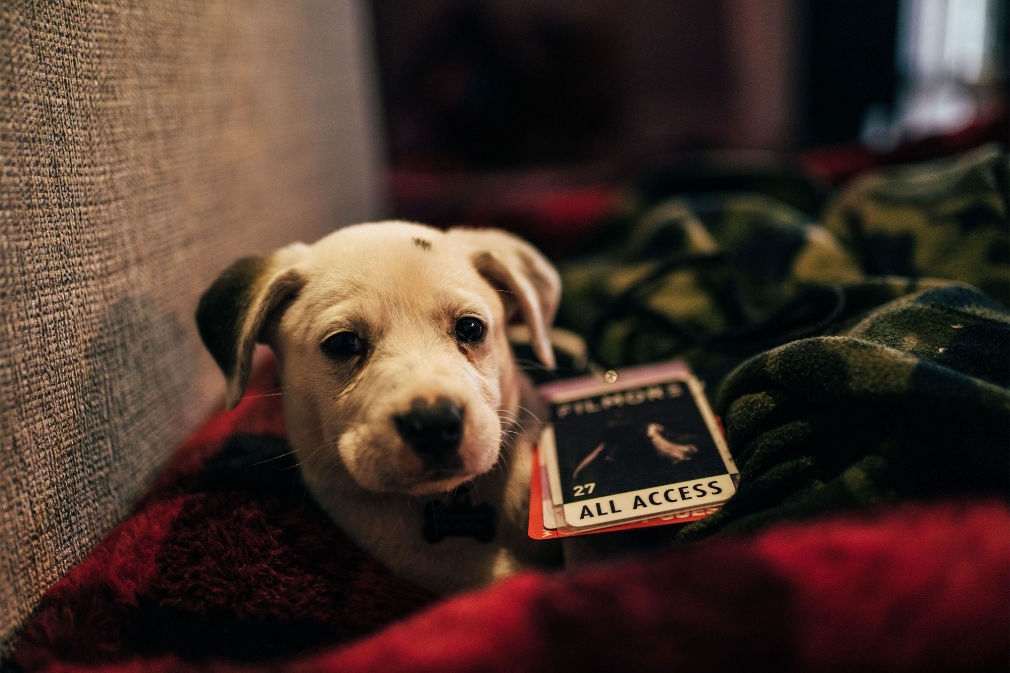 flimore country artist adopts dog