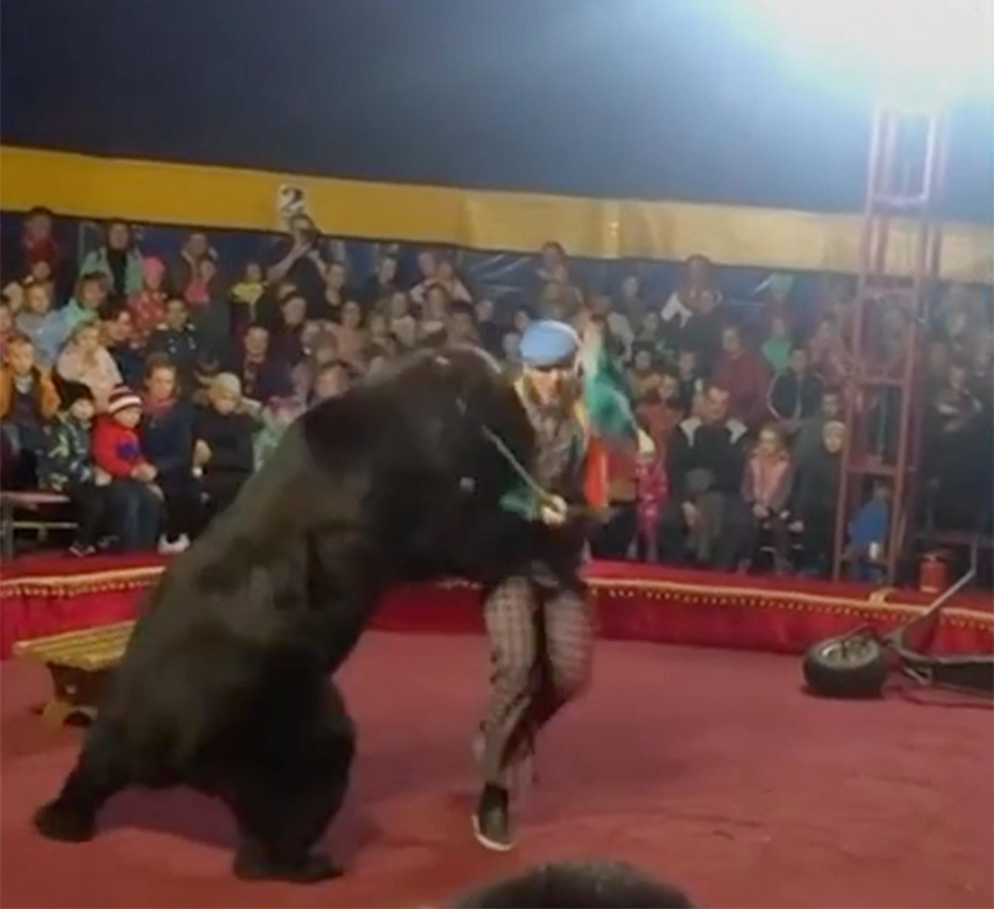 Russian Handler Survives Mauling by Circus Bear