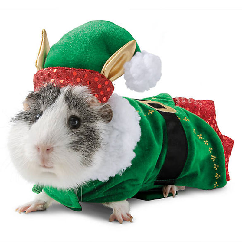 petco guinea pig holiday costumes