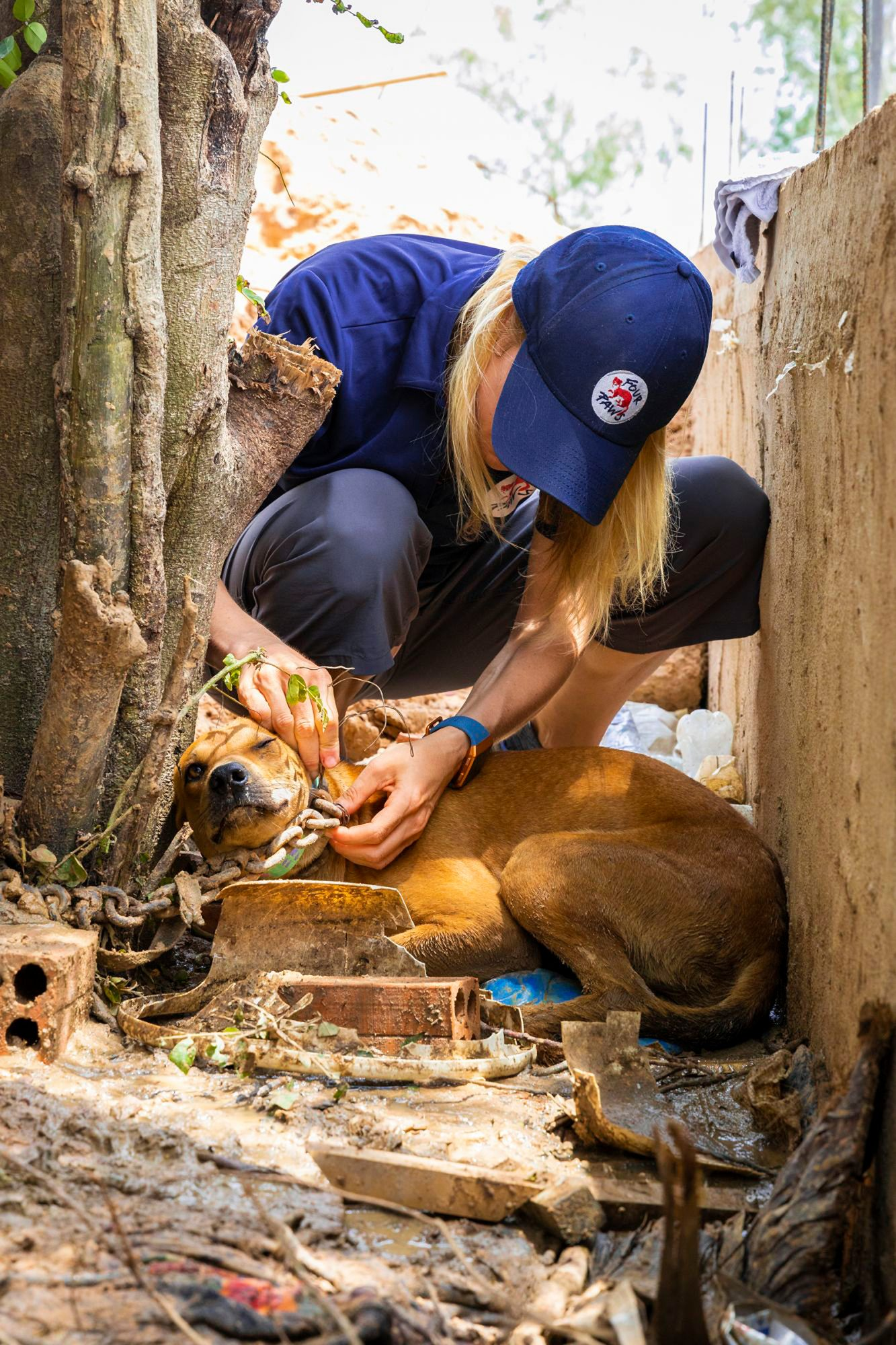 rescued dogs from Cambodia