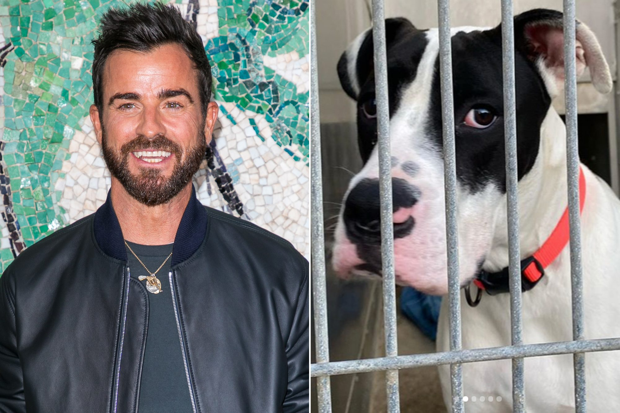 Justin Theroux, rescue dog