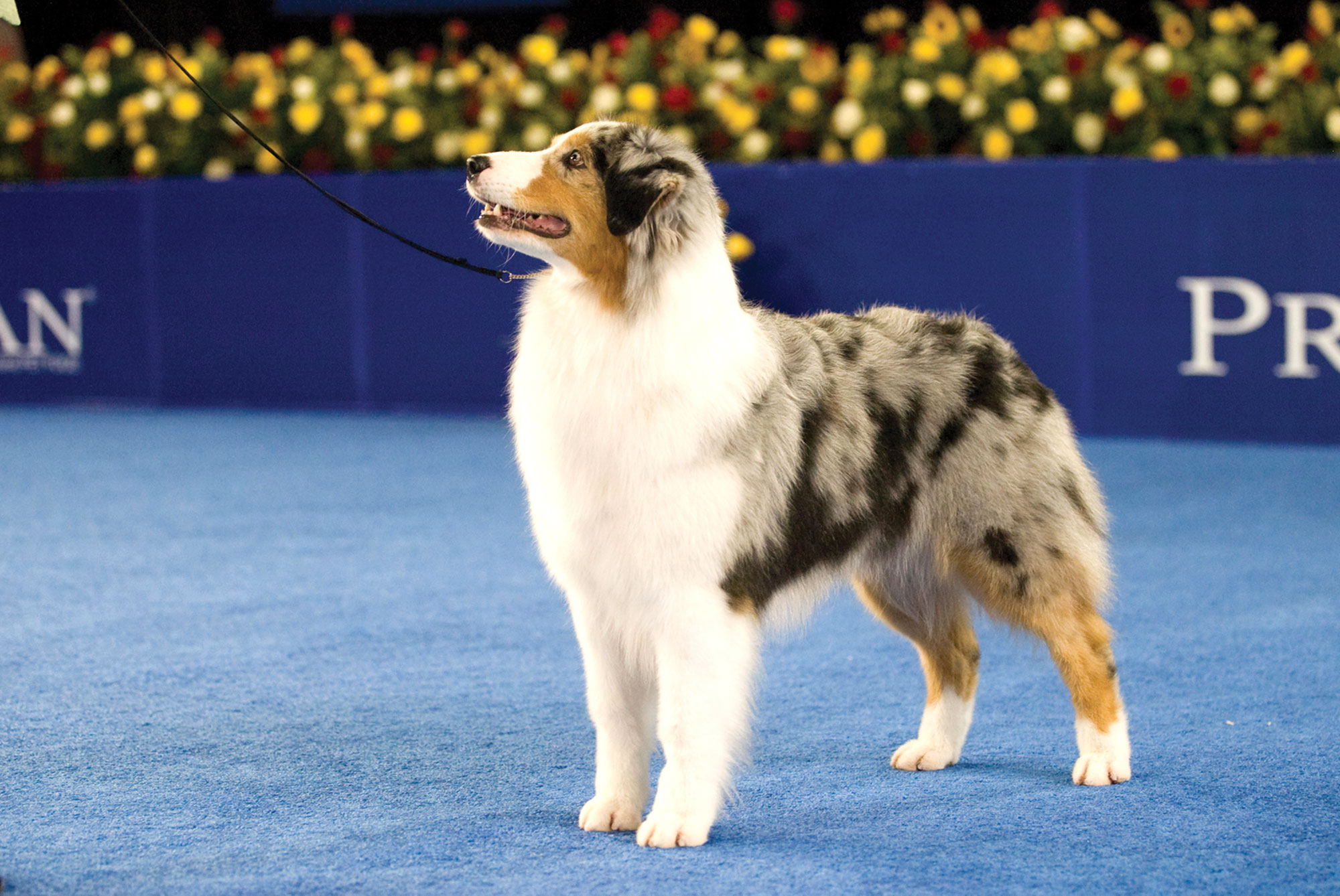 national-dog-show-10