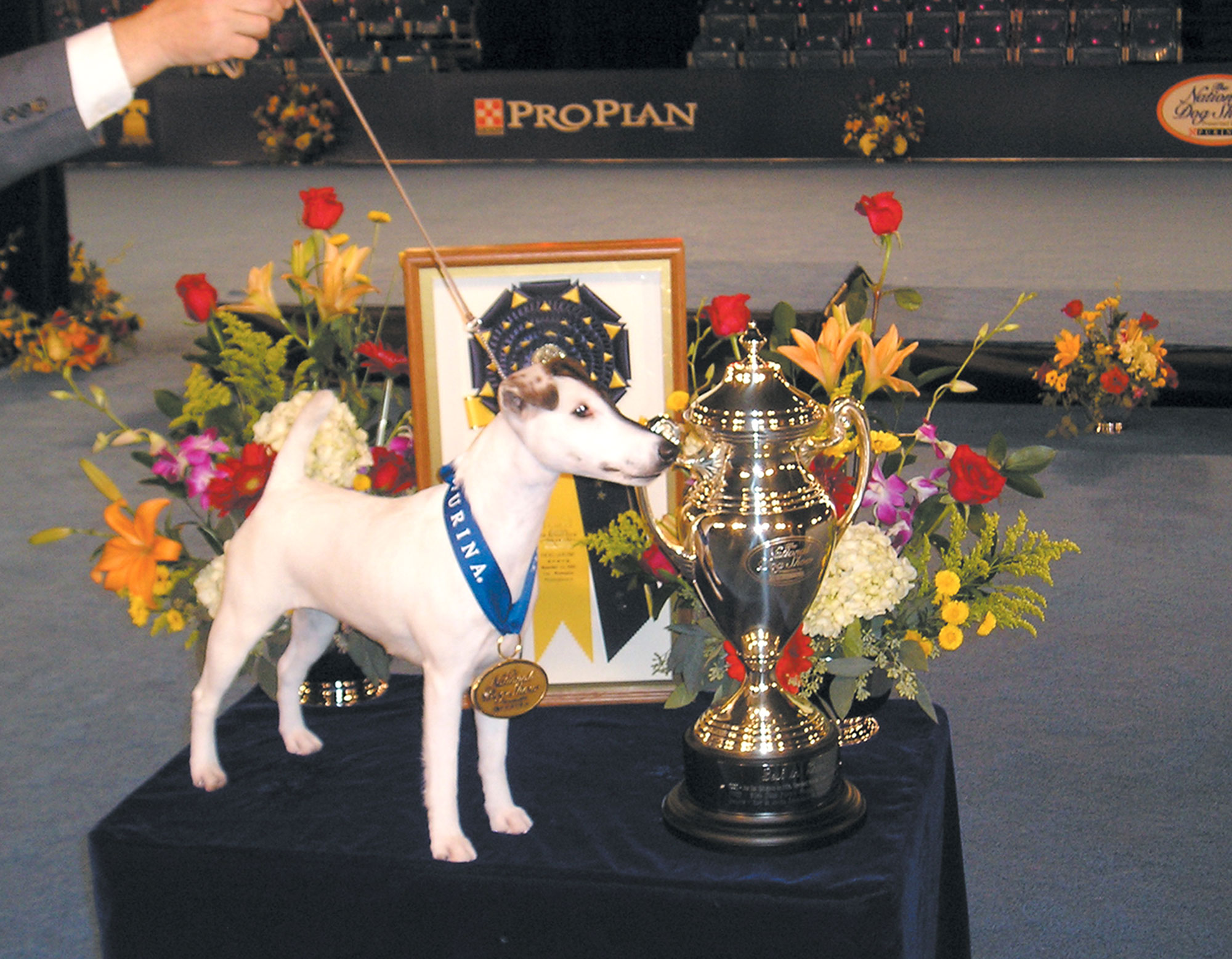 national-dog-show-13