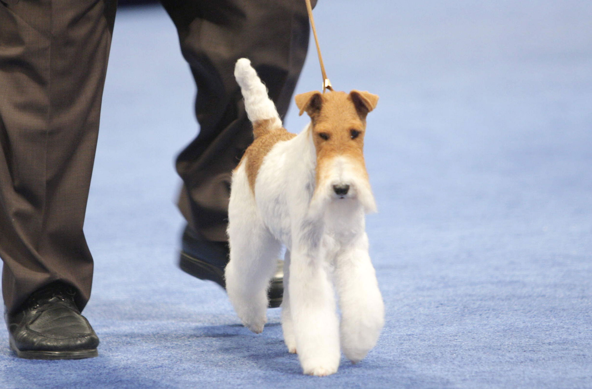 The National Dog Show Presented by Purina - Season 2012