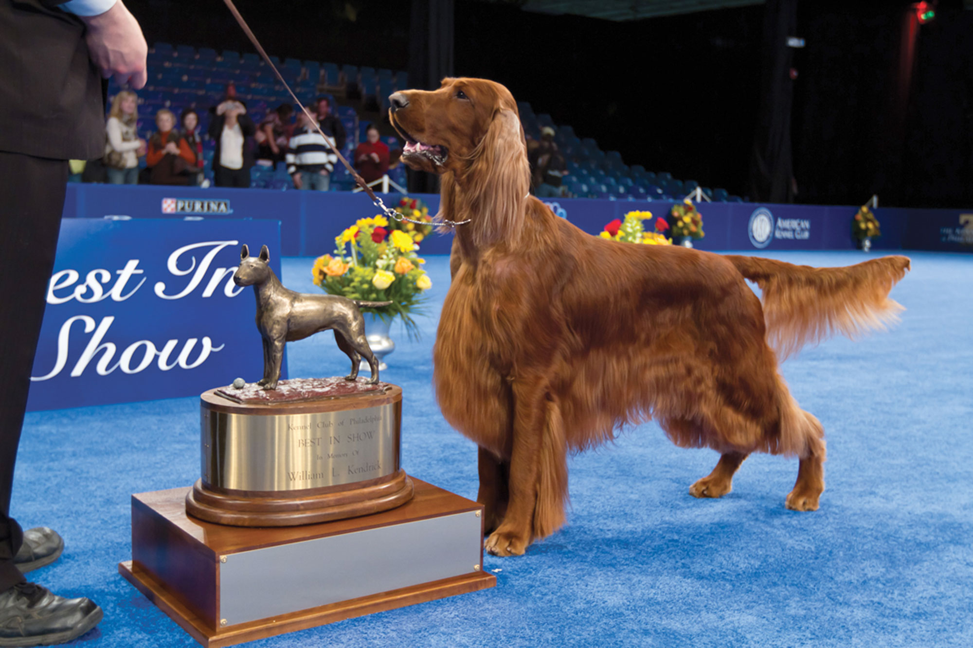 national-dog-show-9