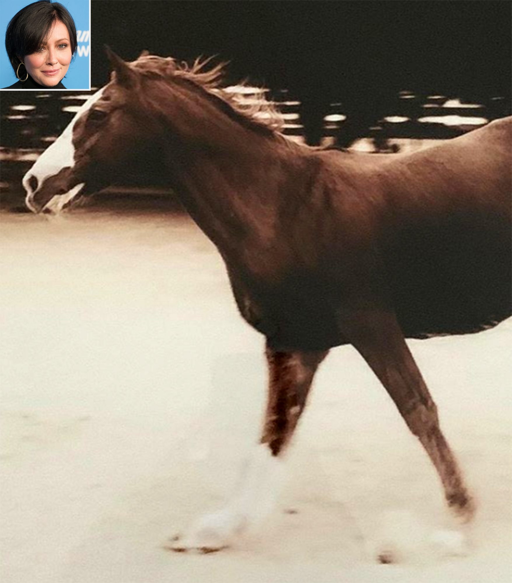 Shannen Doherty horse