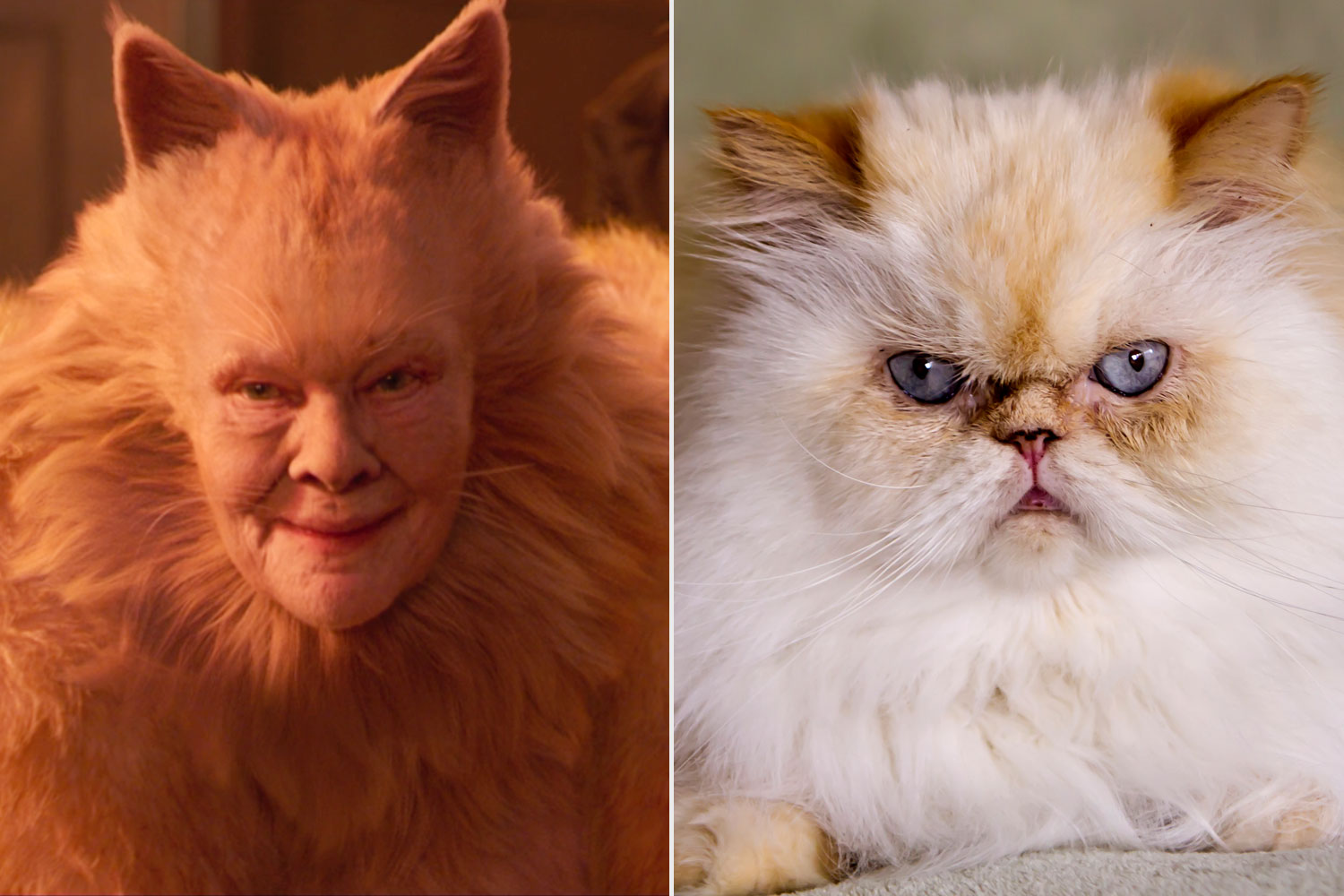 Judi Dench Cats