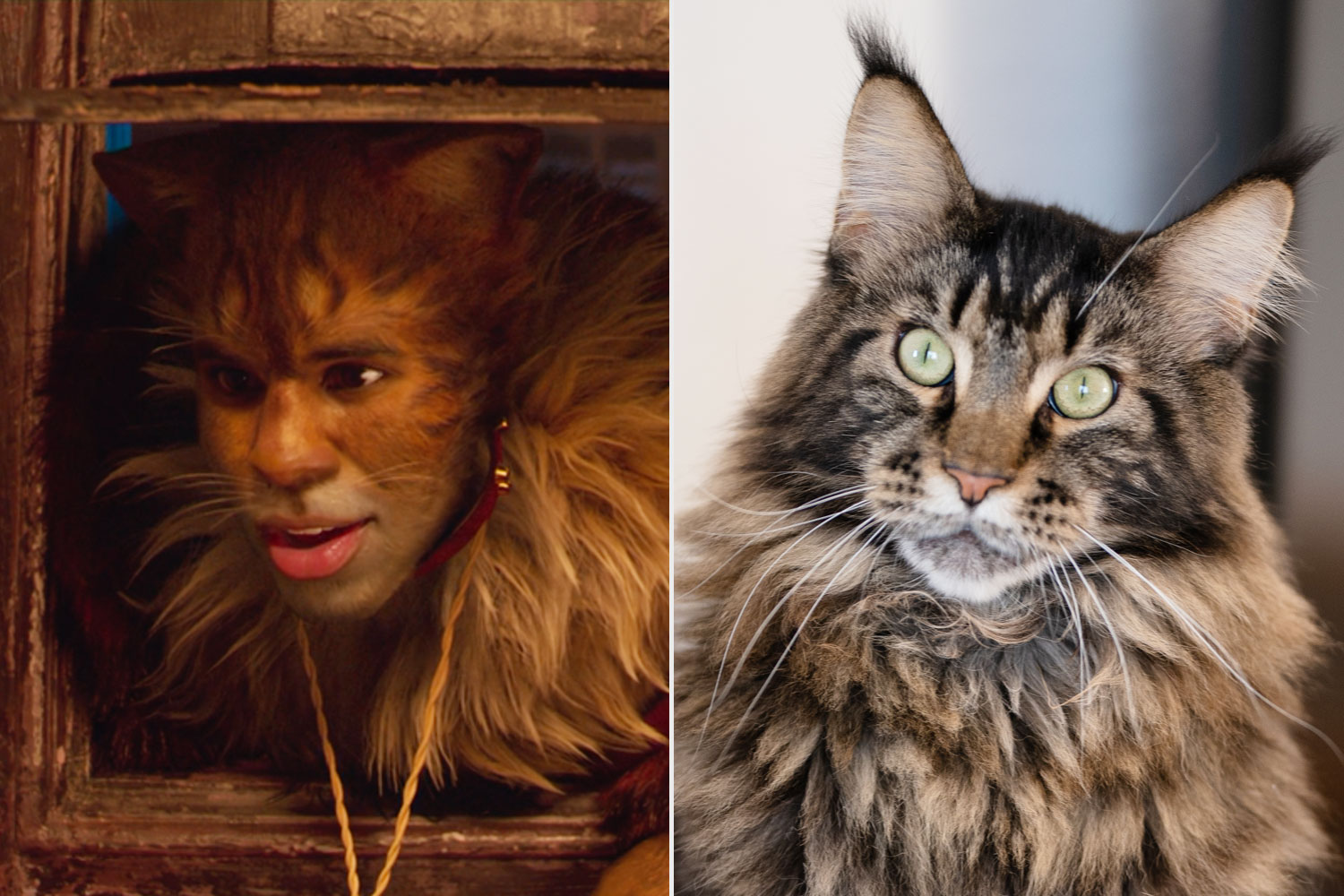 Jason Derulo Cats