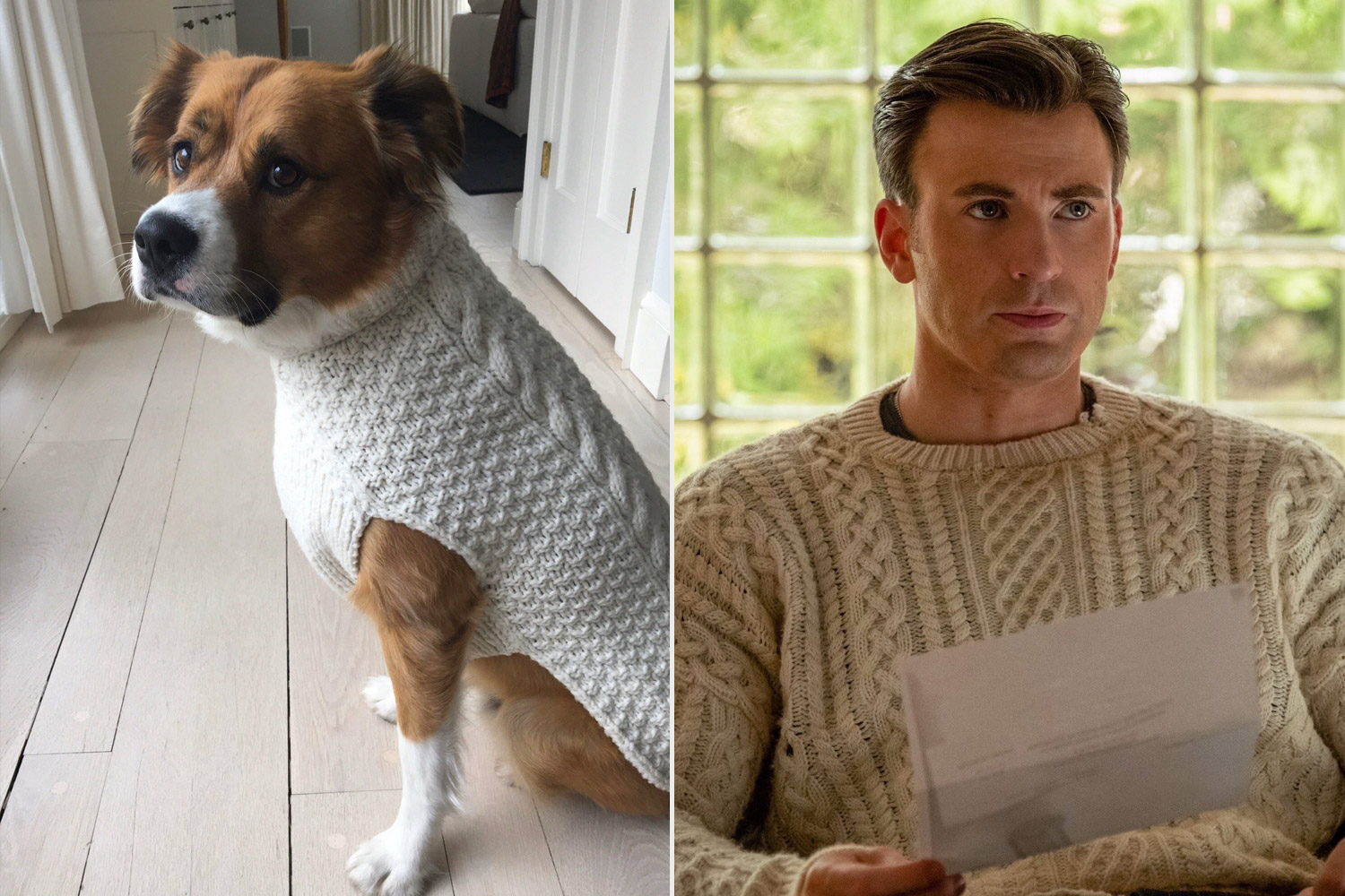 Chris Evans Gets His Beloved Dog a Matching Knives Out Cable-Knit Sweater