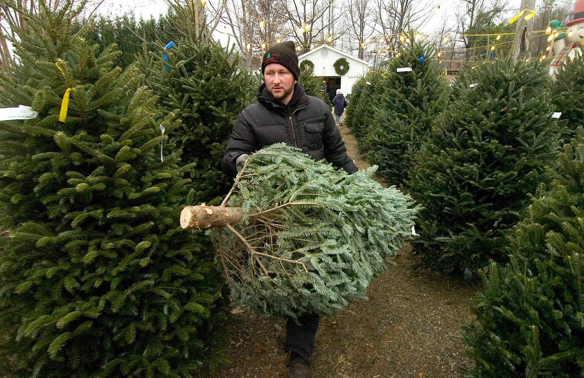 christmas-tree-lot