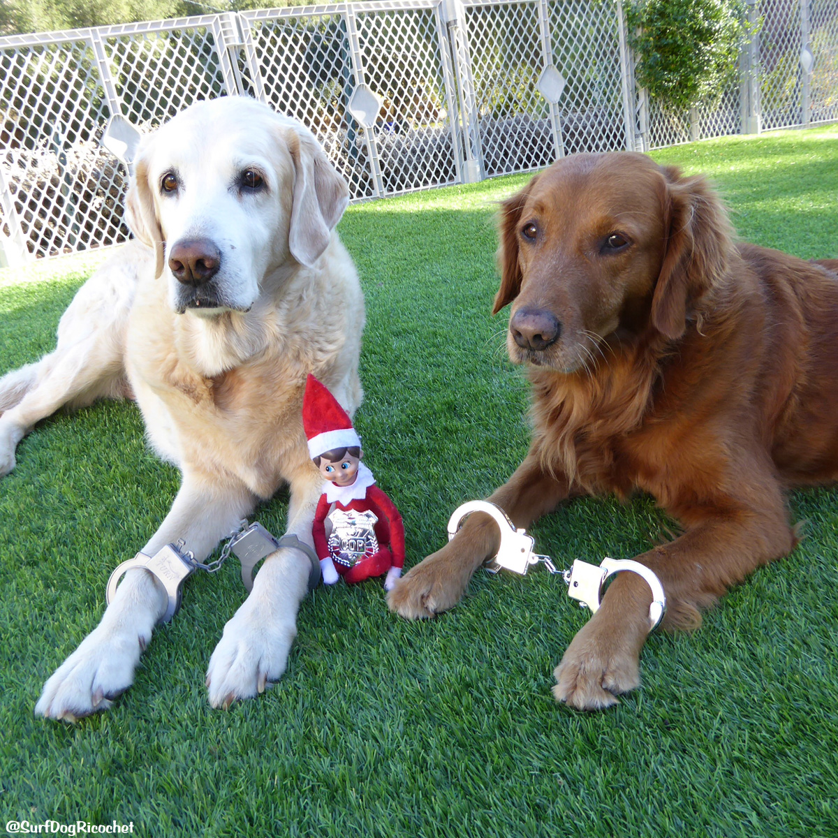 Elf on the Shelf with Dogs